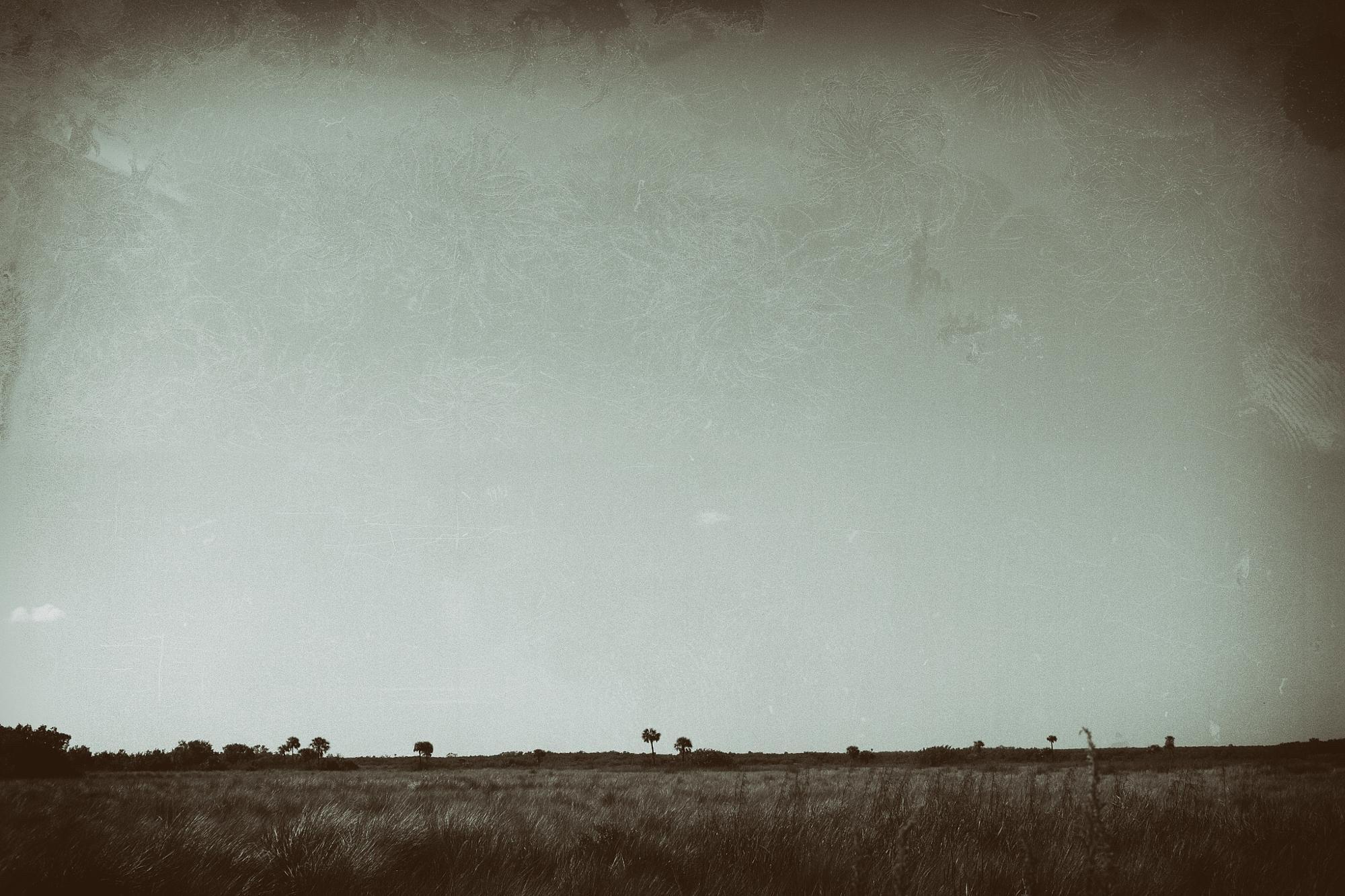 American Serengeti by David Stebbing