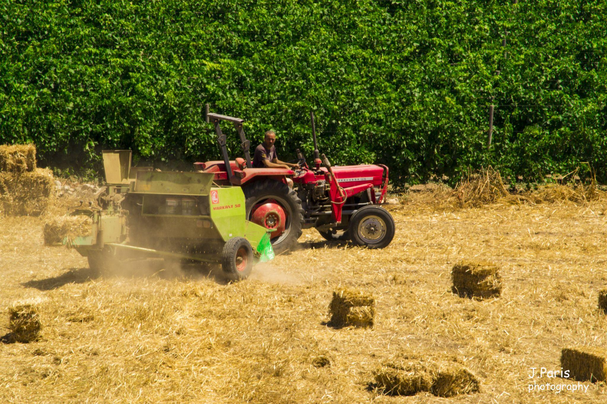 Harvest by Jonathan Paris
