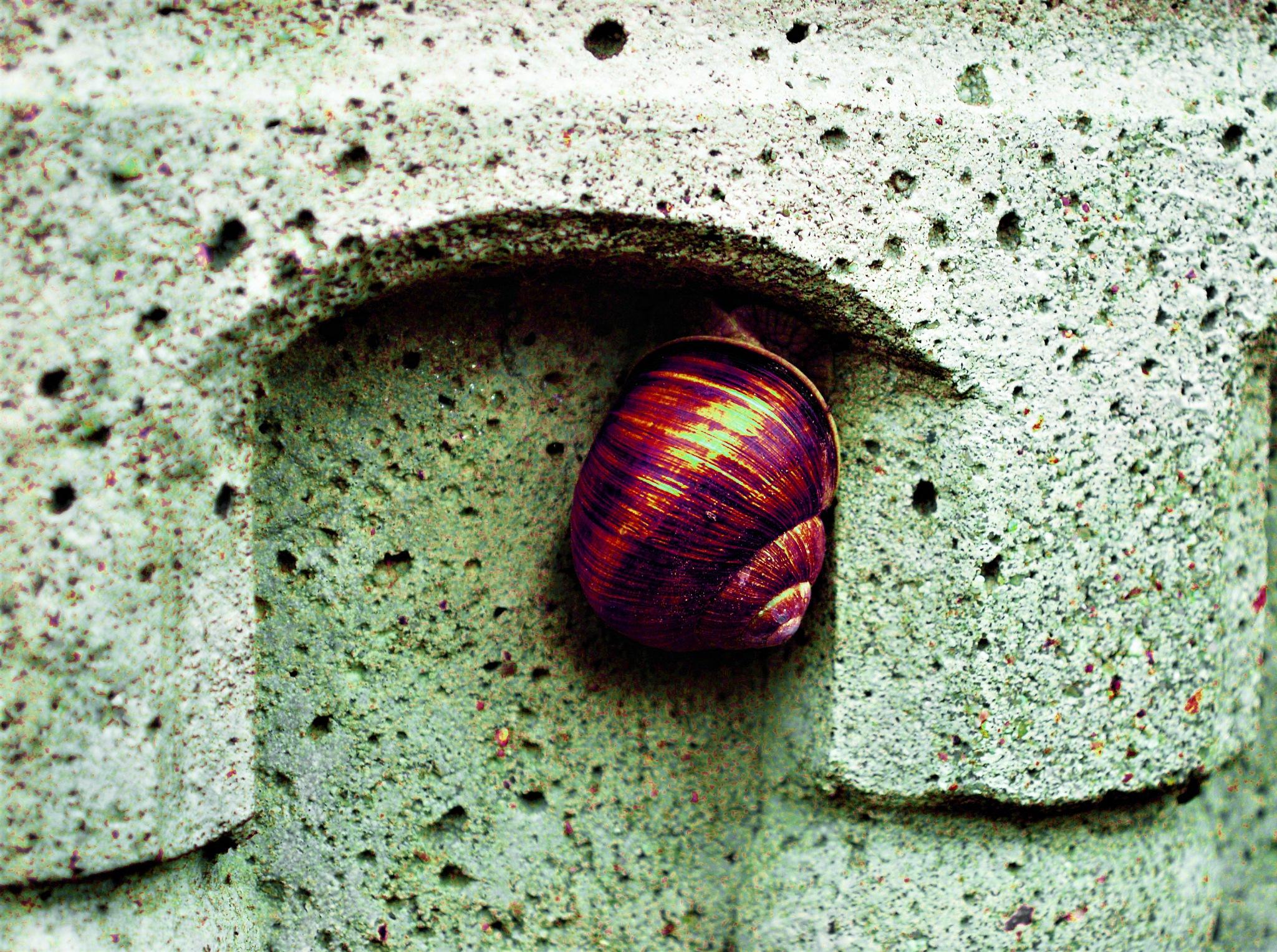 Hidden snail ....... by kasiaba