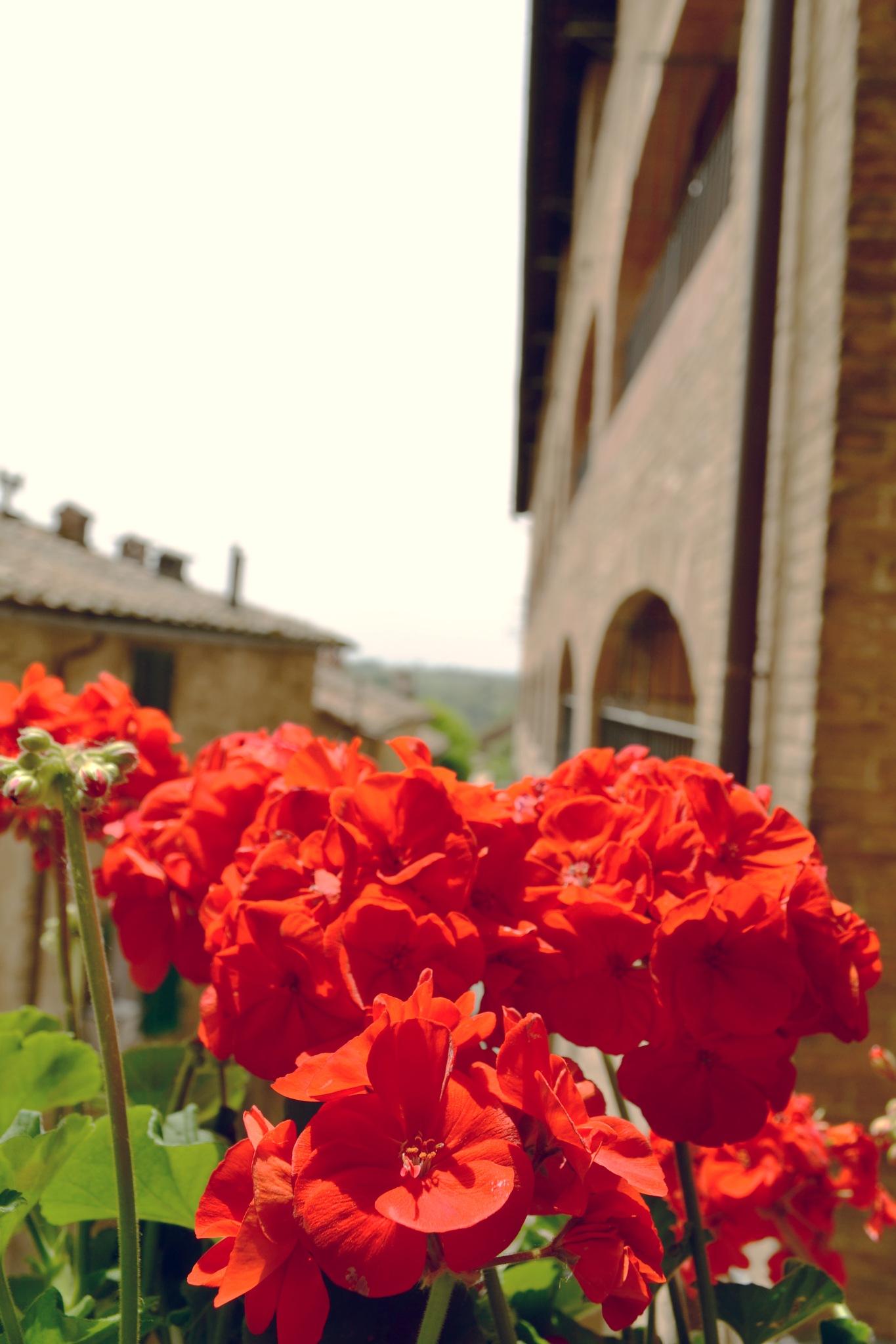 Siena, Italy by Jan Nieschulz