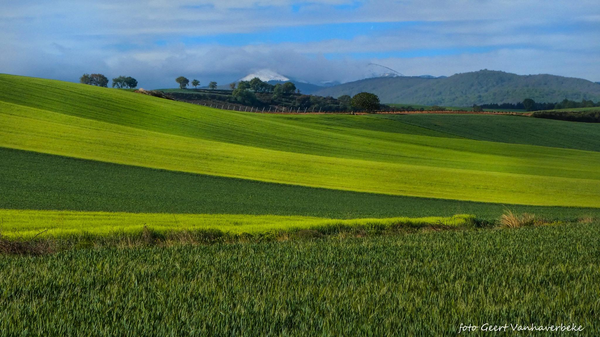 Fields on Camino Frances in April by Geert Vanhaverbeke