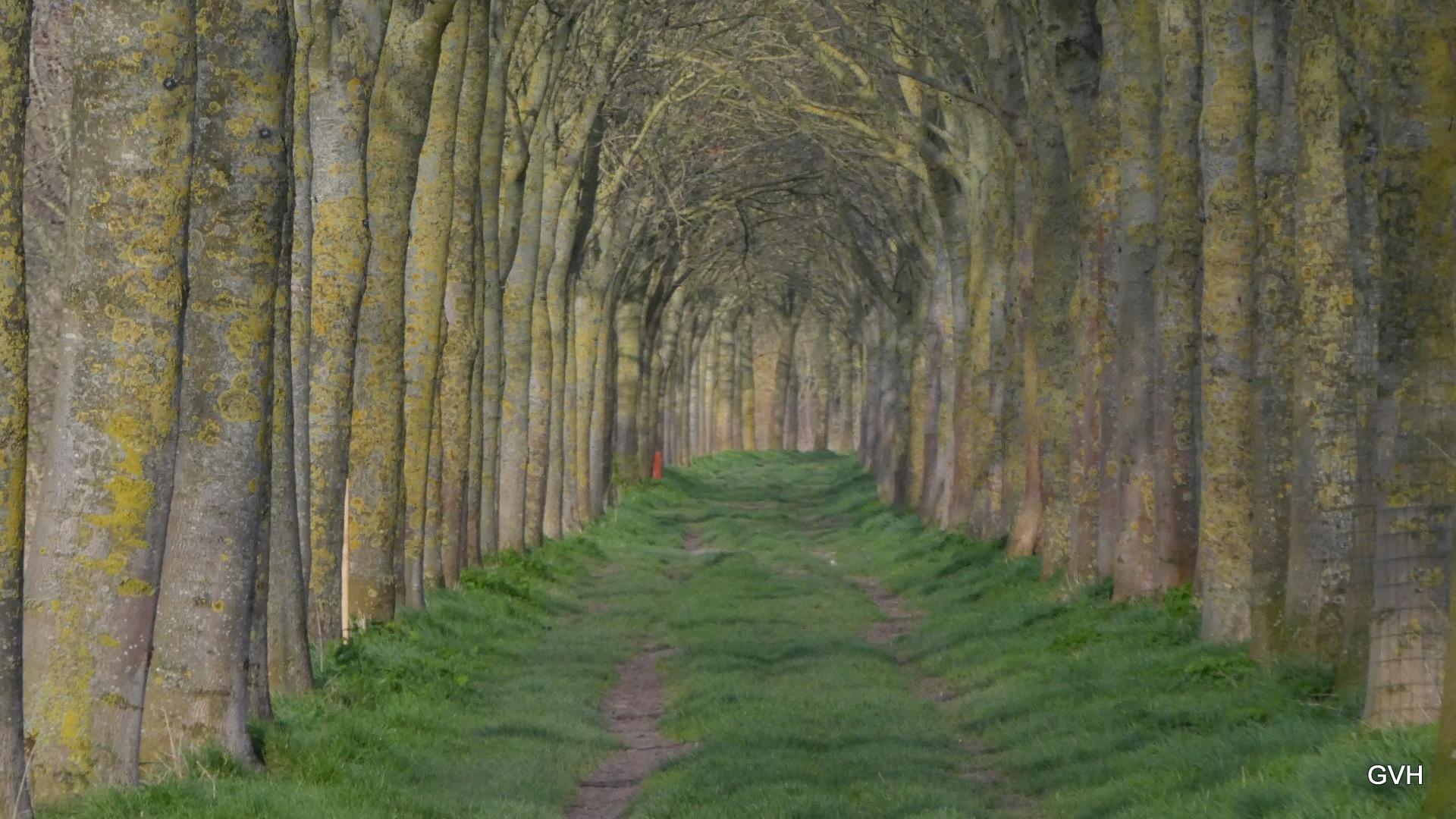 trees by Geert Vanhaverbeke