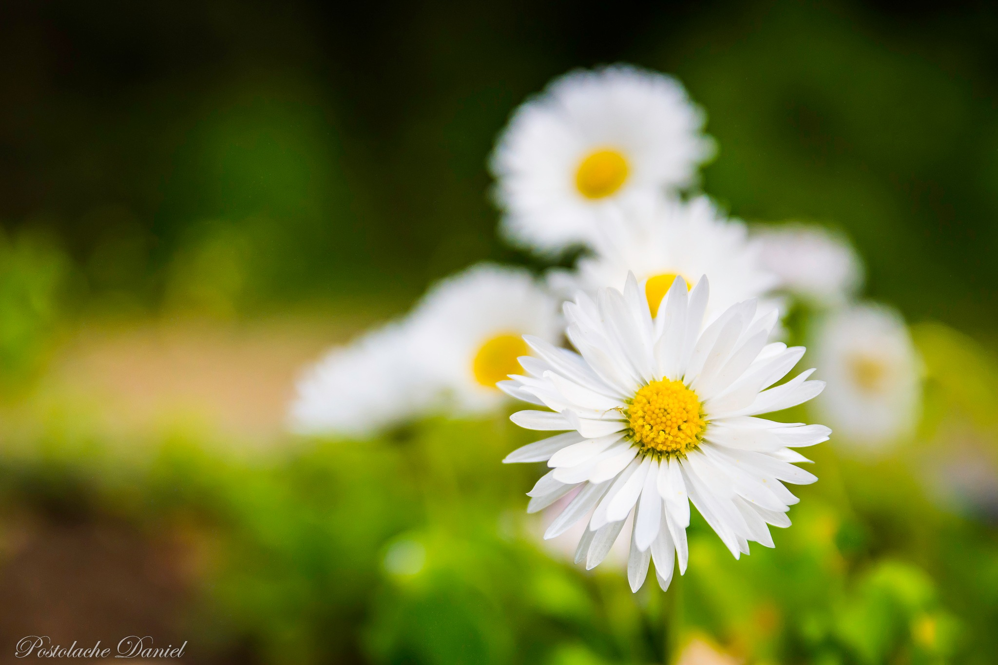 Spring time by Postolache Daniel