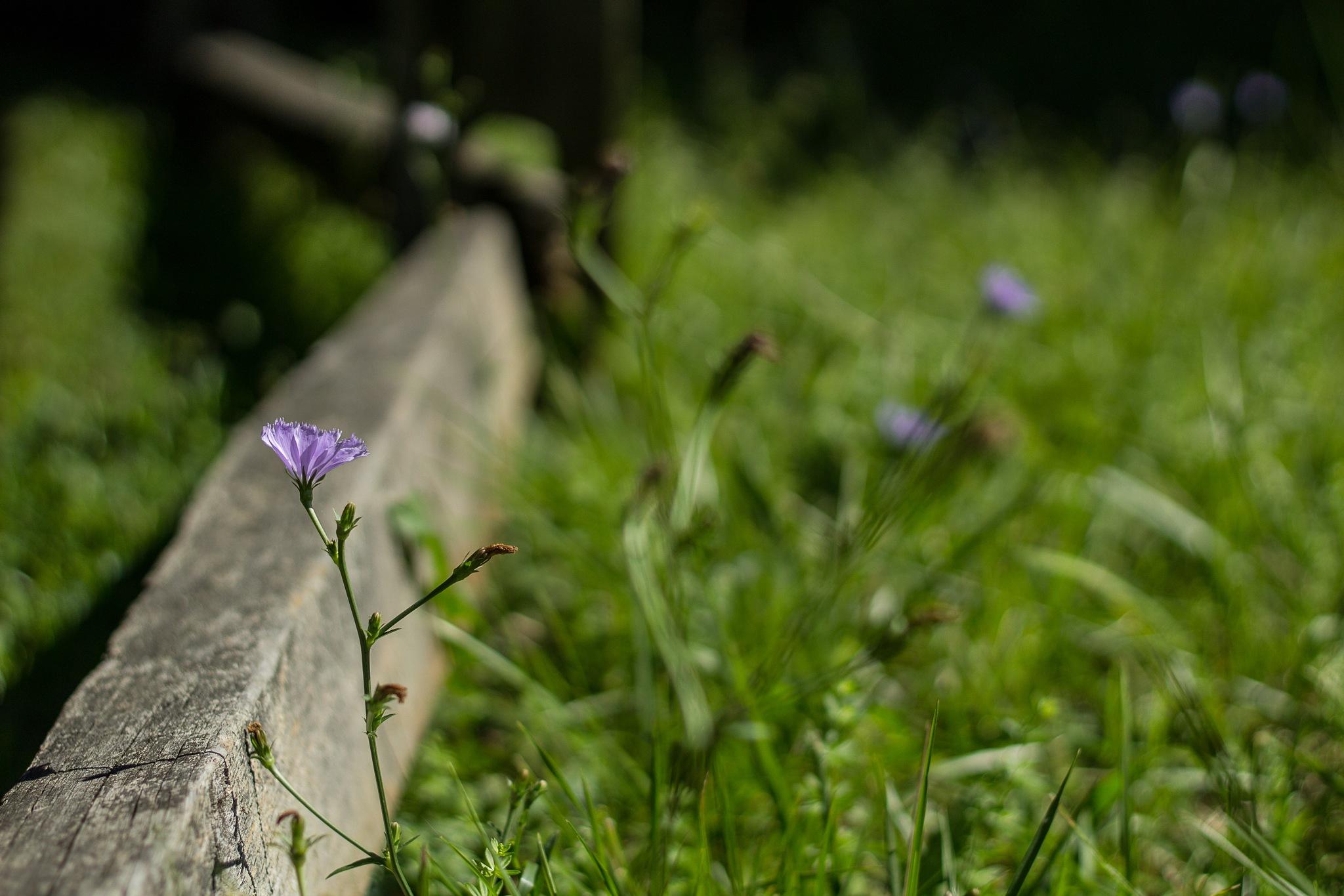 Wildflower in a Field by Monique DeLay Gartner