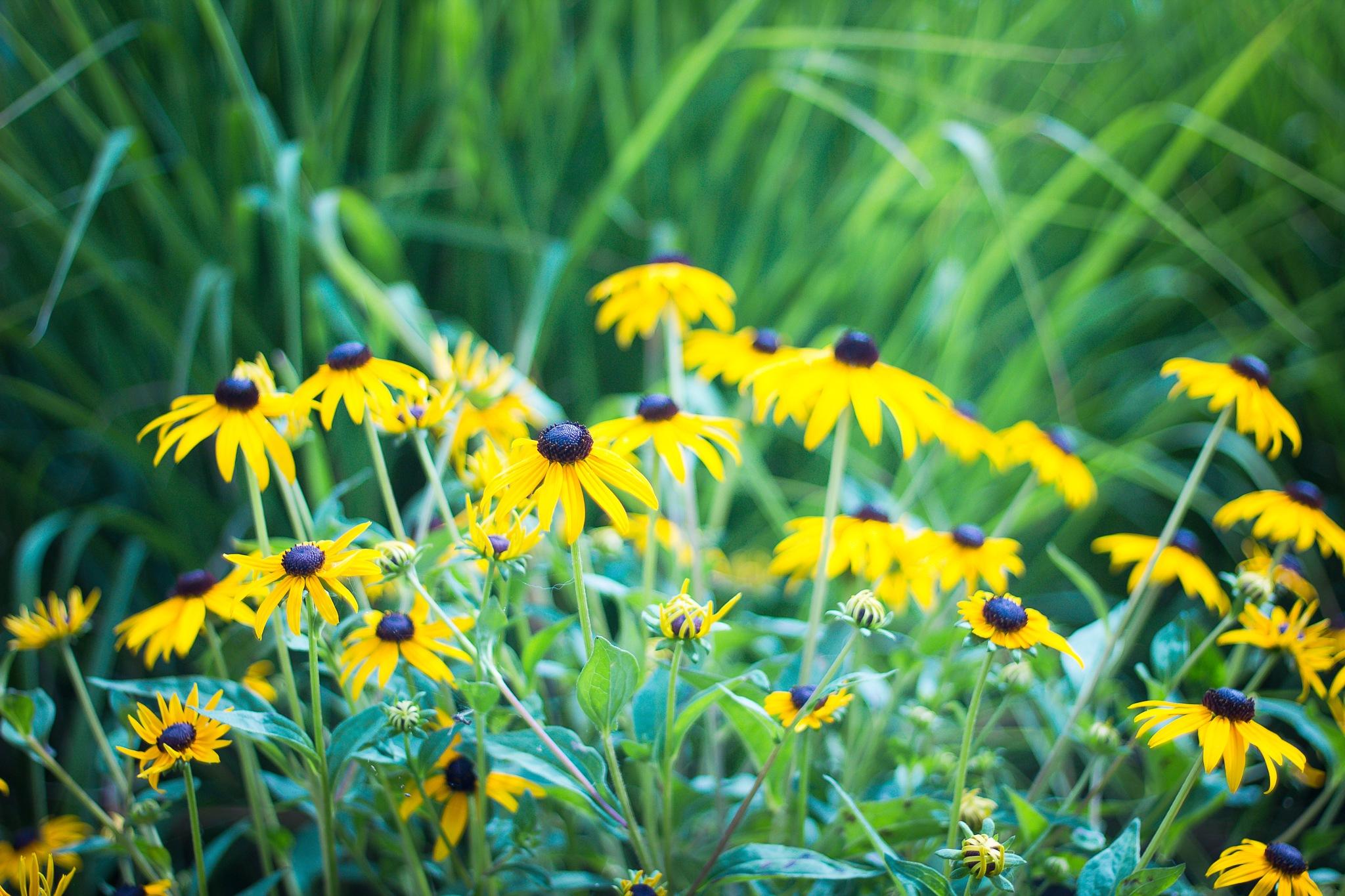 Bright summer flowers by Monique DeLay Gartner