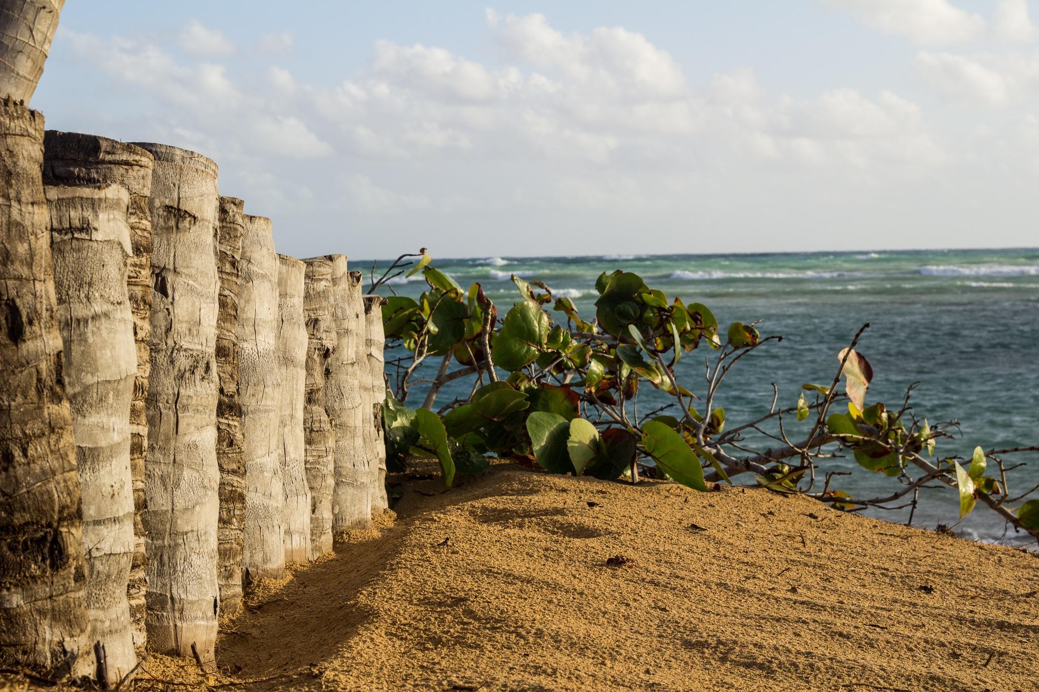 Beach by Monique DeLay Gartner