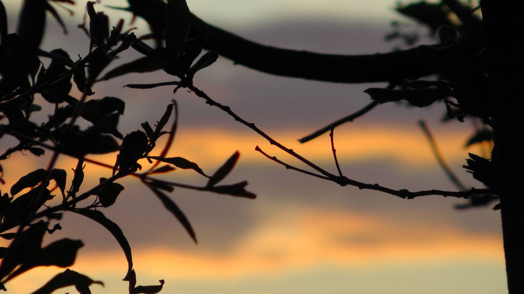 sunset  by Letizia Rostagno