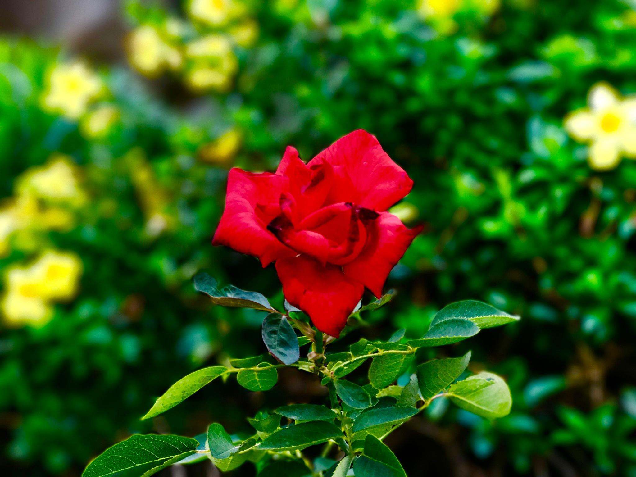 Flower by Emmanuel Modeste