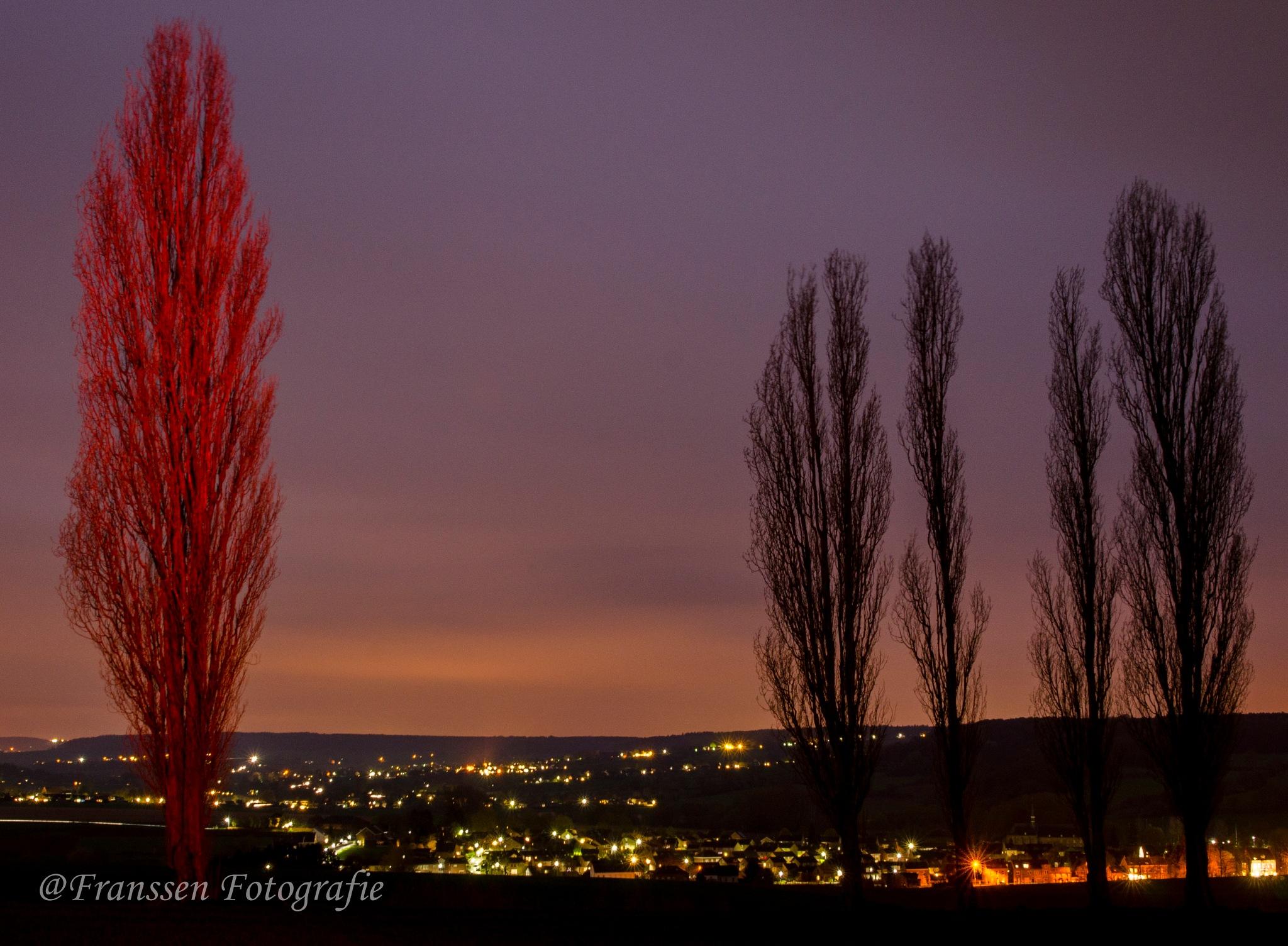 Red tree by @Franssen Fotografie