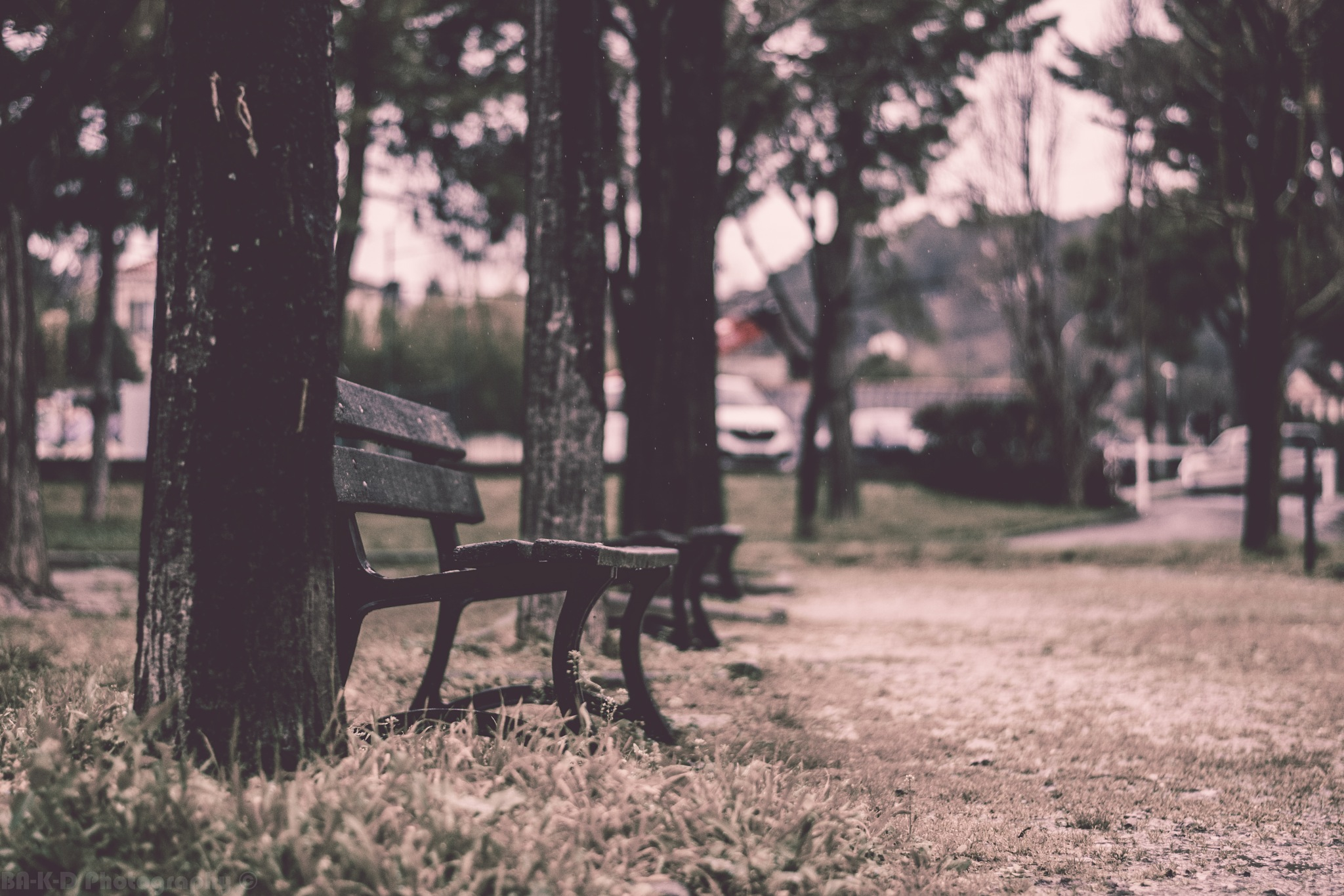 Solitude, Fidélité  by Moh-dinho Bakadi