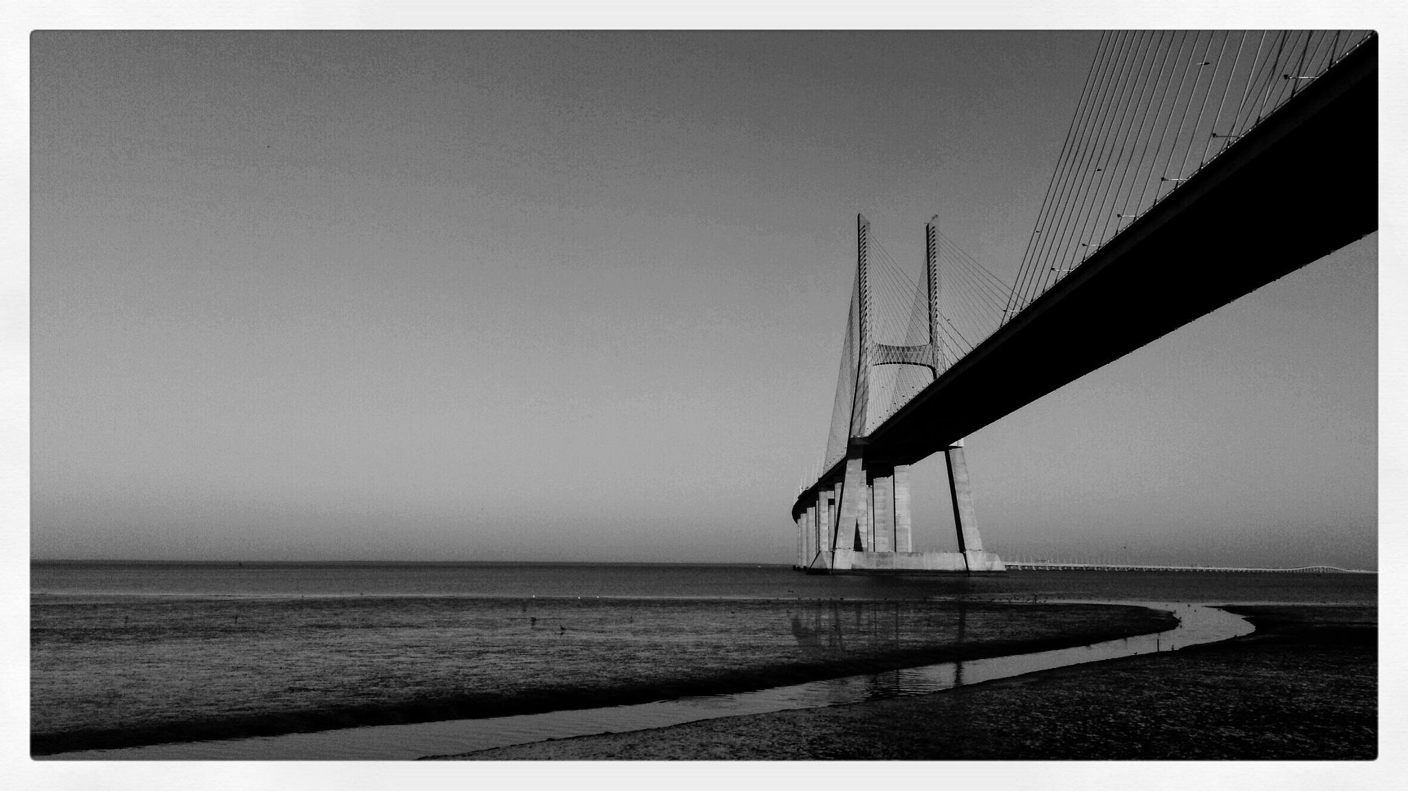 Grey  by Bruno Tomaz Costa