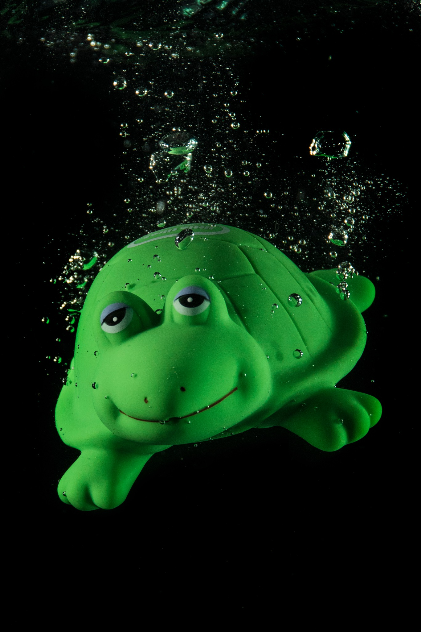 Little Turtle  by LloydEvans61
