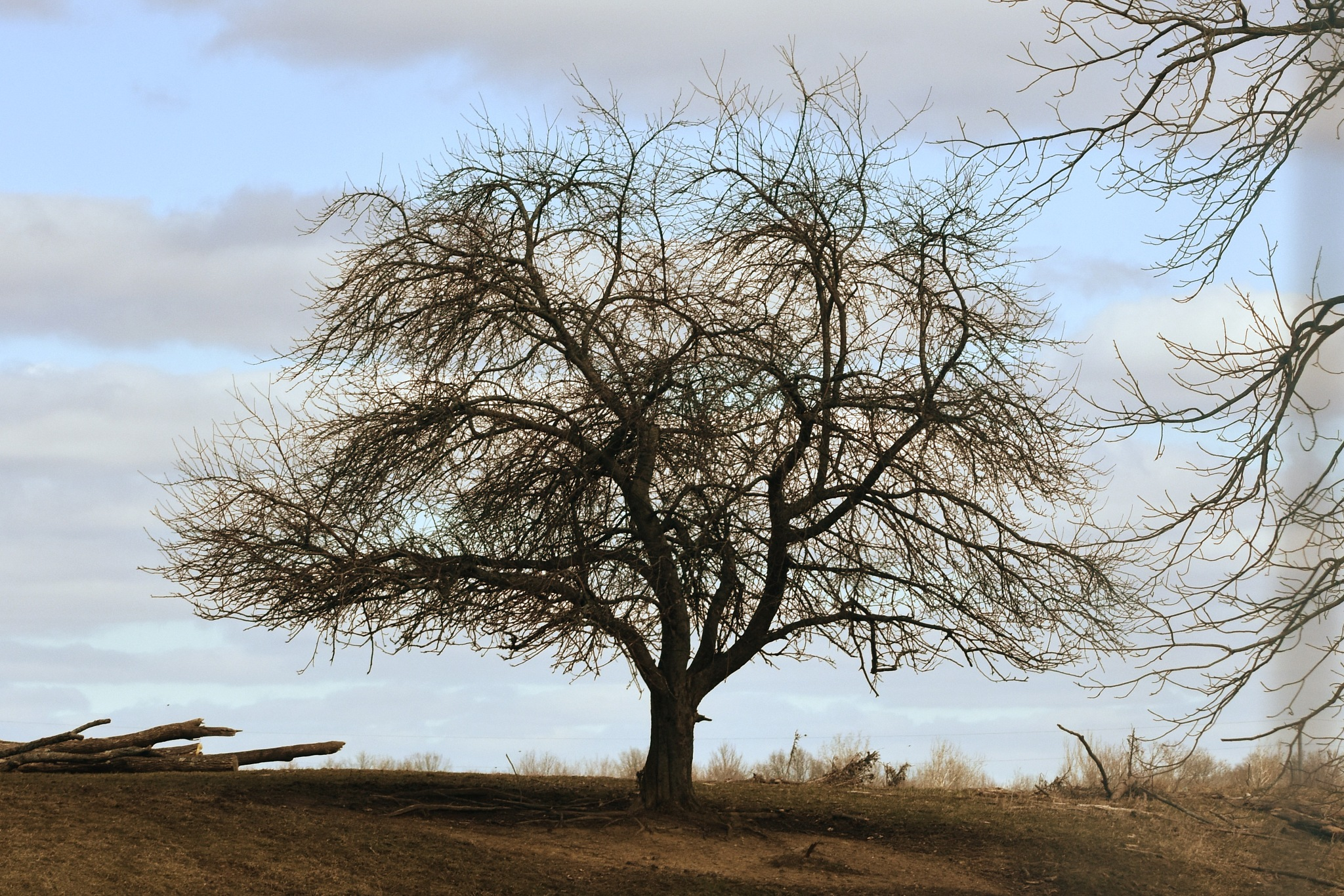 The Bare Tree by Renee Kennedy
