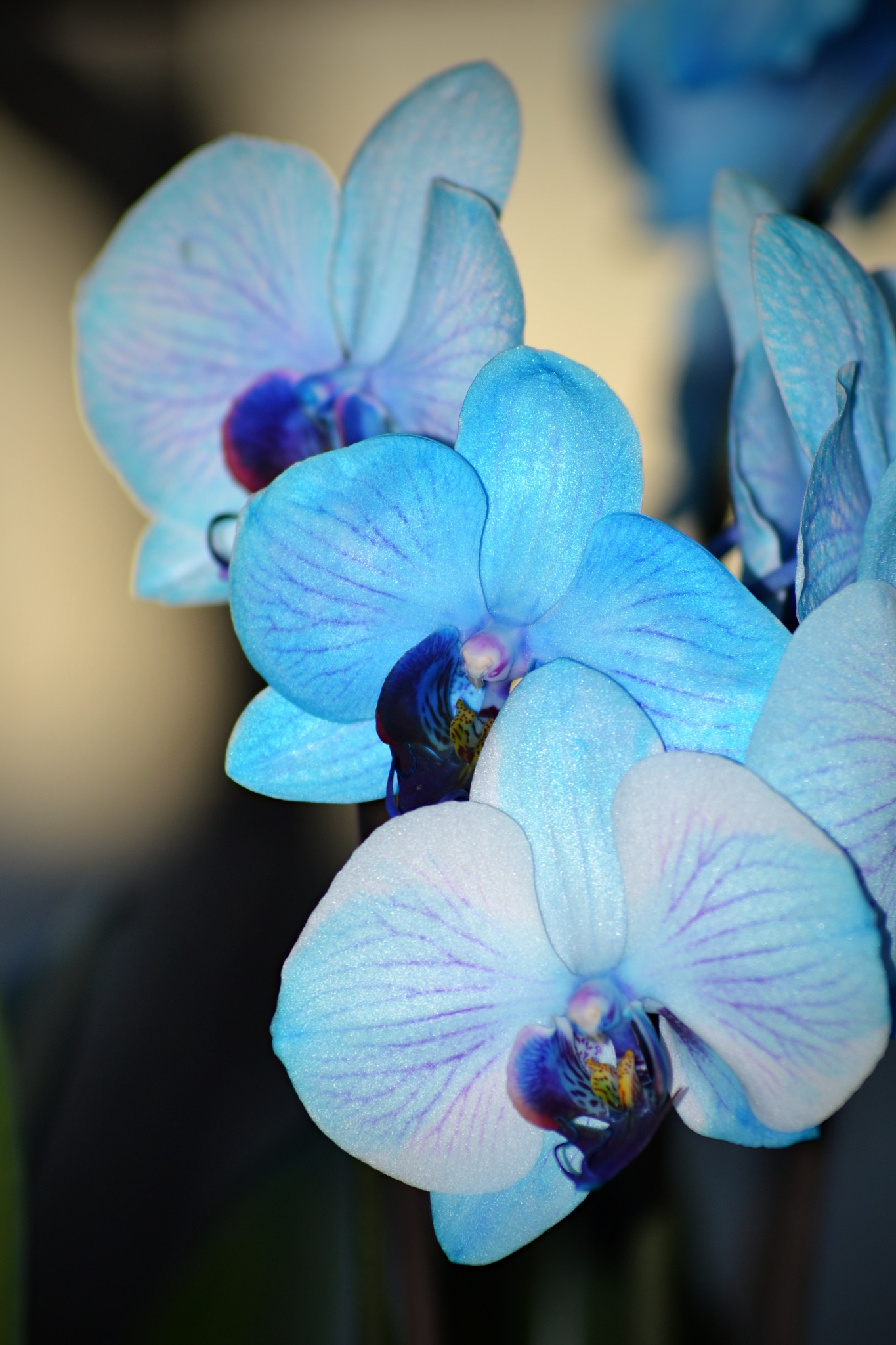 Blue Orchids by Renee Kennedy