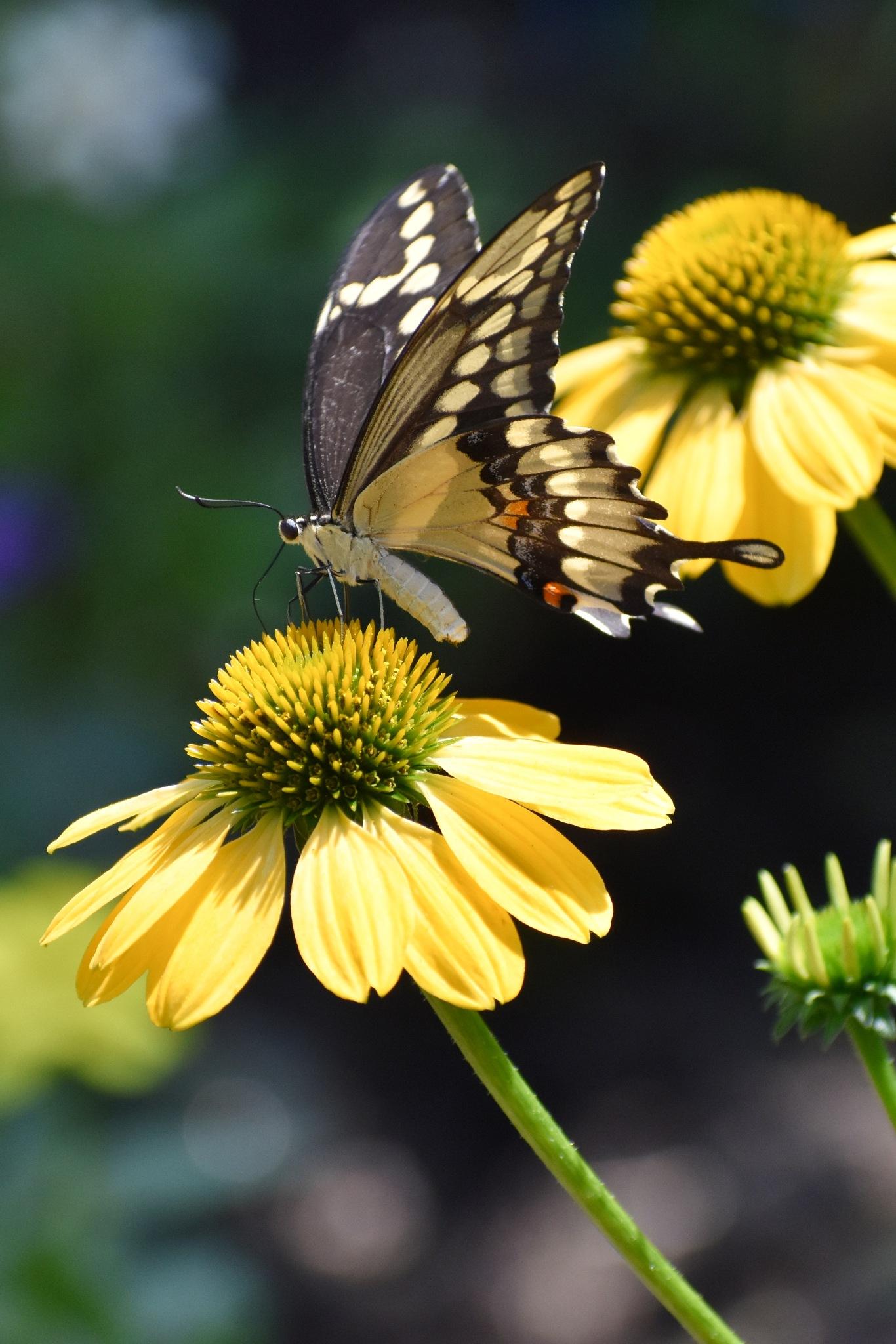 The Butterfly by Renee Kennedy