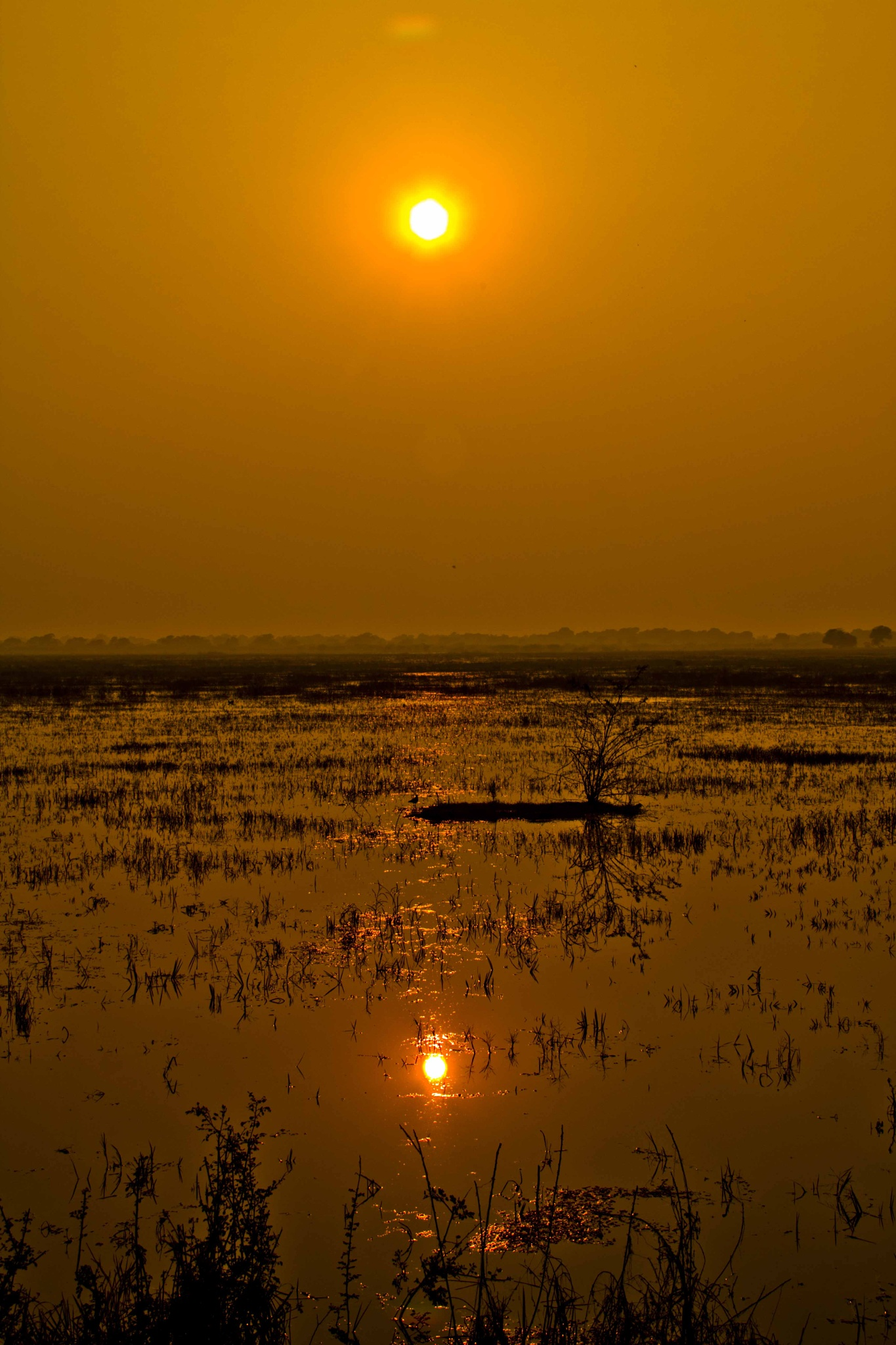 Golden Sunset by Anant Wagle