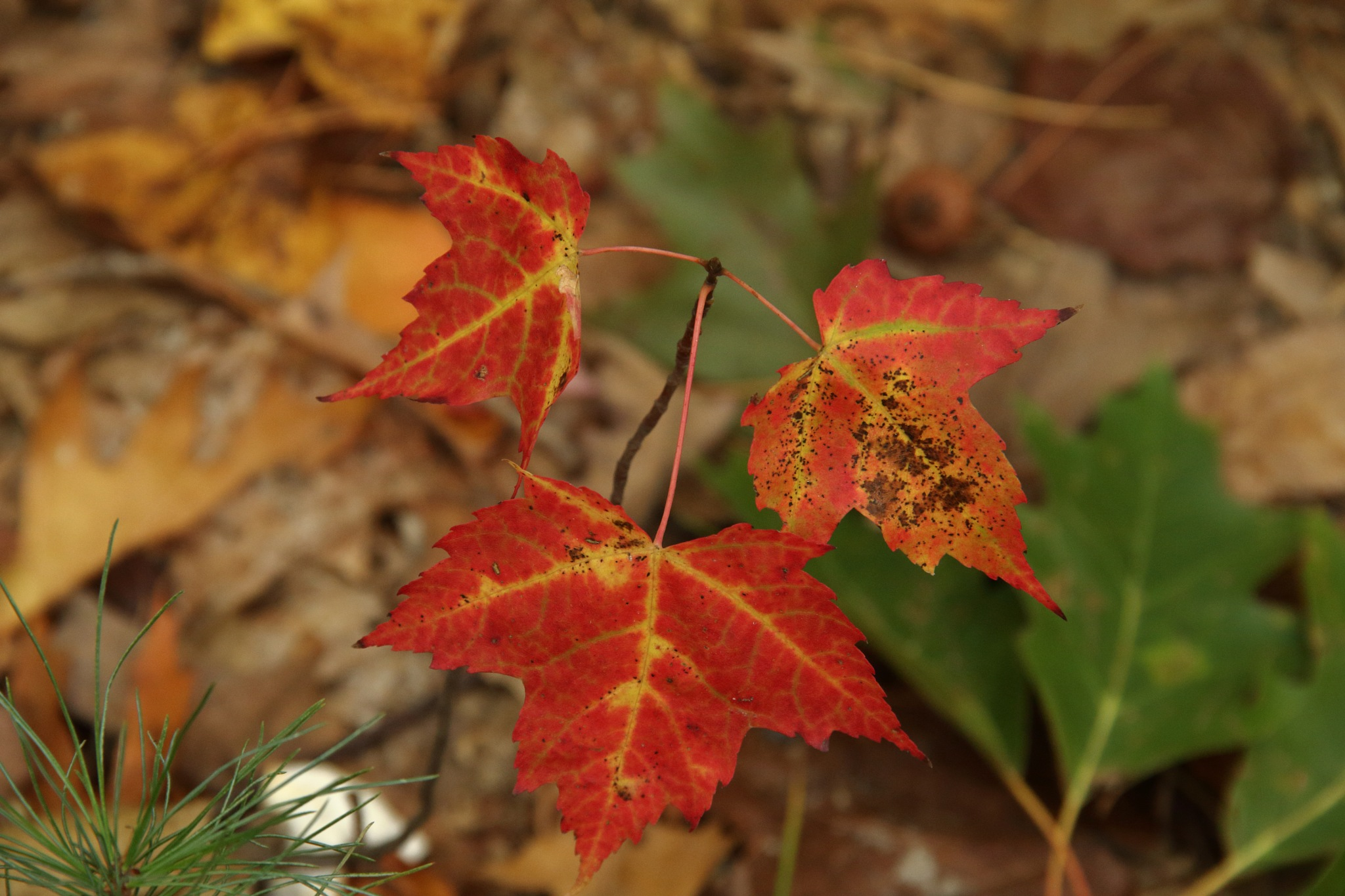 Leaves by Anant Wagle
