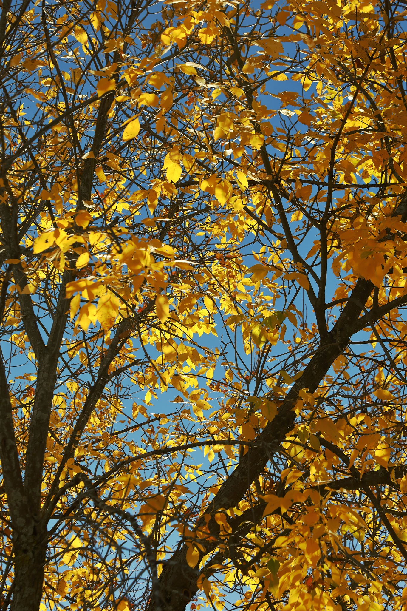 Golden leaves  by Anant Wagle