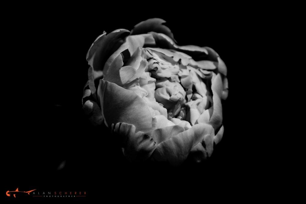 Untitled by alanschererphotographer