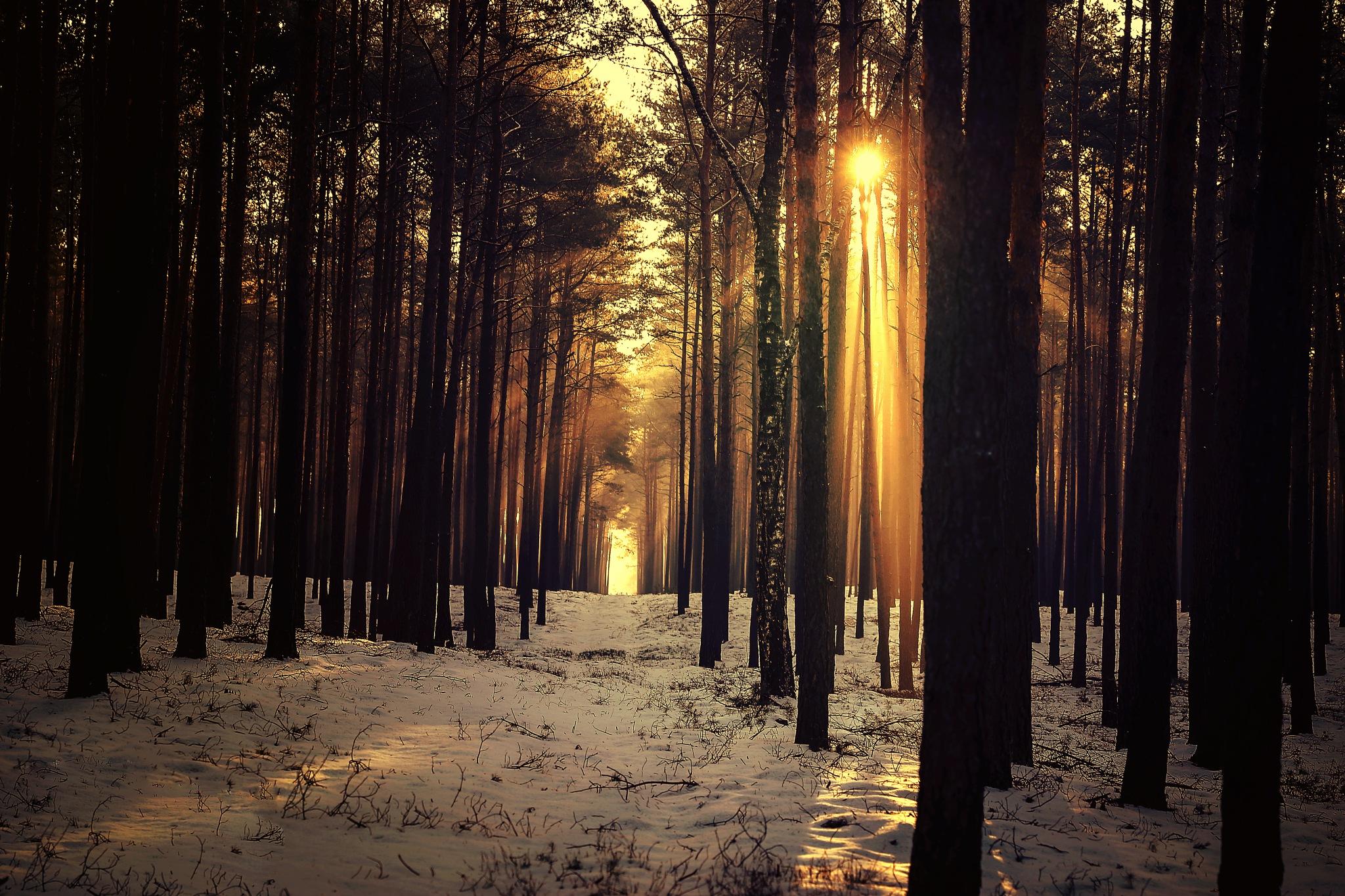 Winter by BaxiaArt
