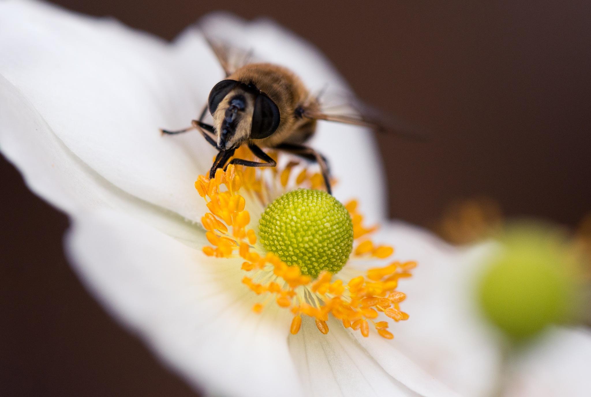 Bee by Ronne Vinkx