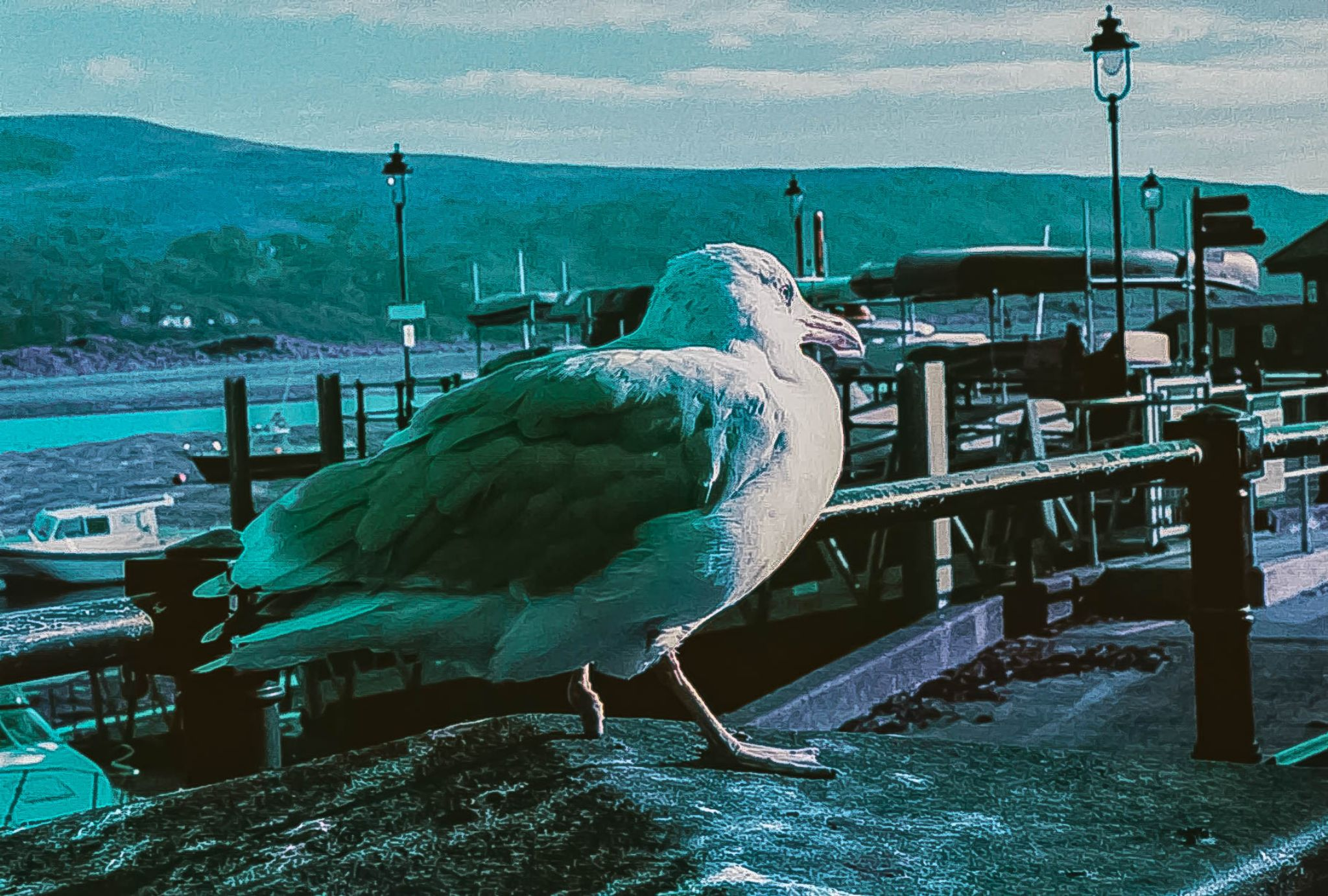Gull by Lee Russell Wilkes