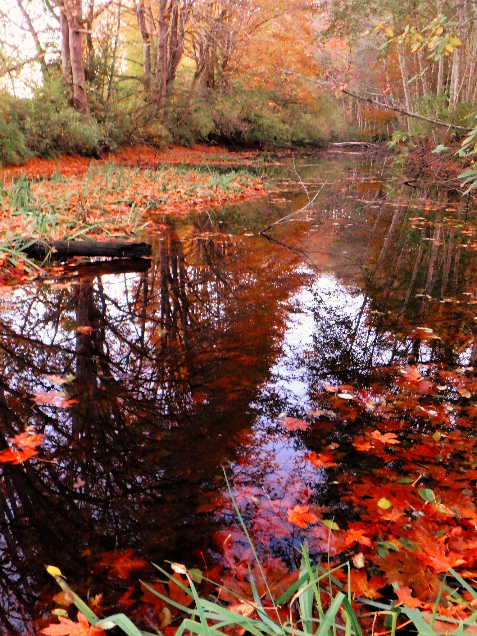 Fall Water by Marty Borsboom