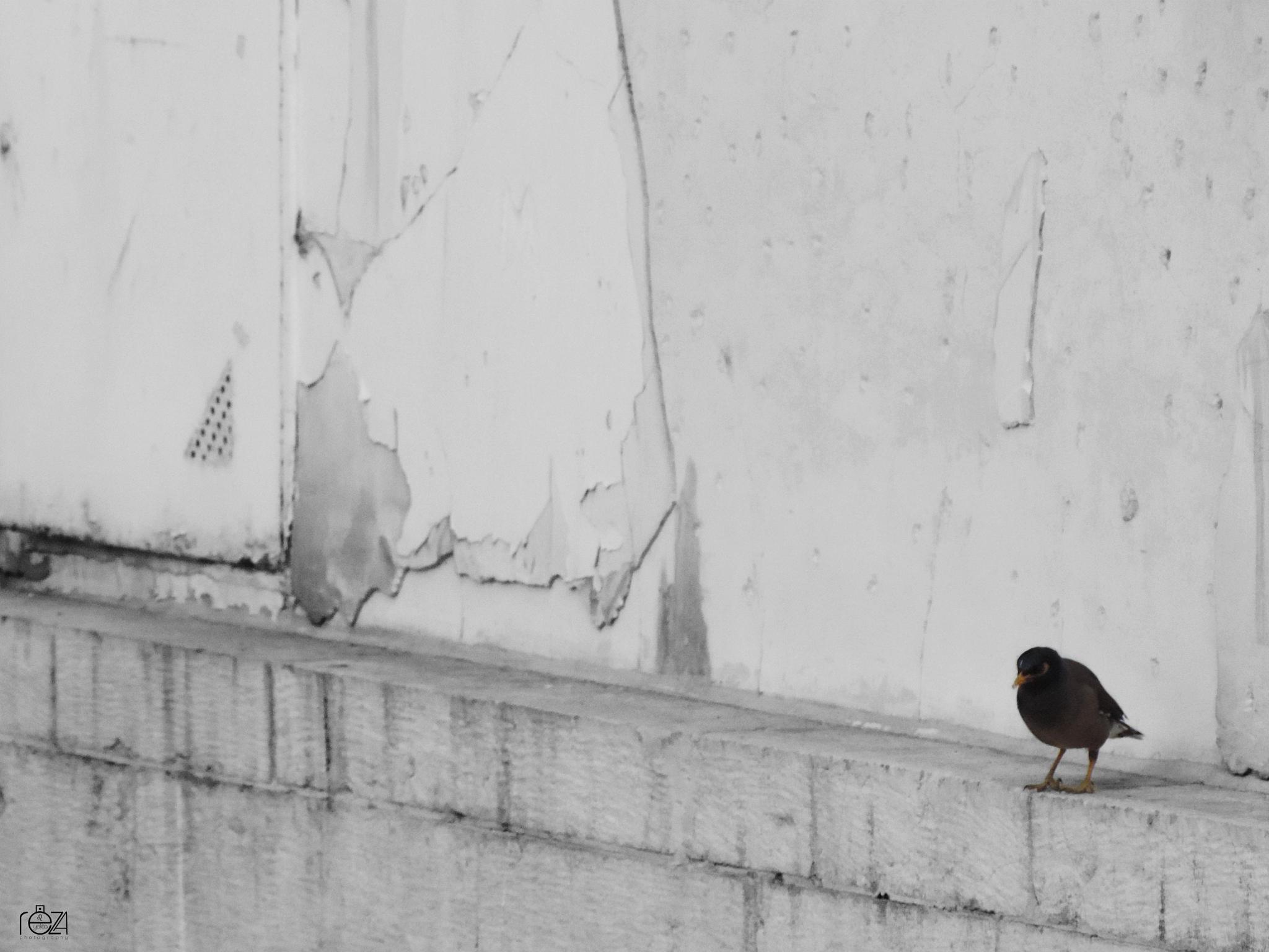 Untitled by Reza Yekta