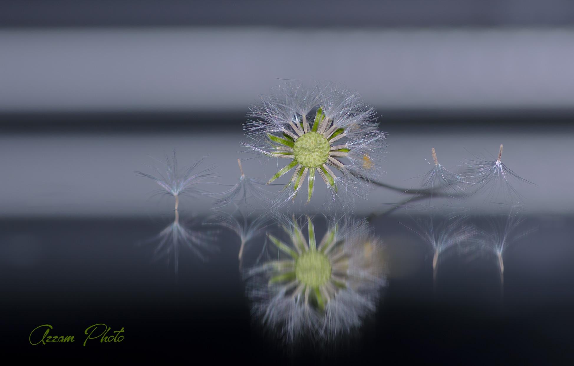 .... by Azzam Qourti