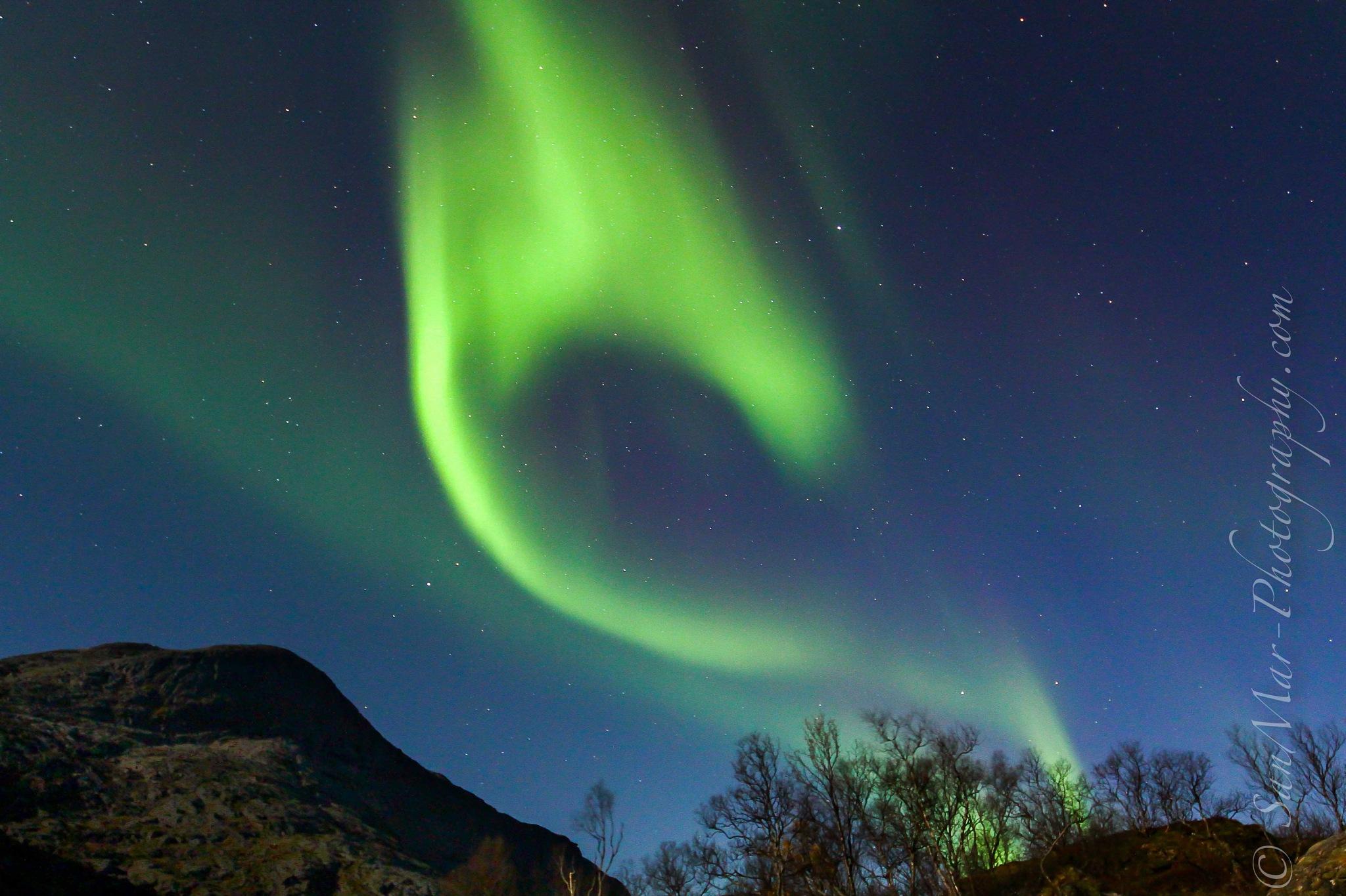 Aurora  by Steve Lamb