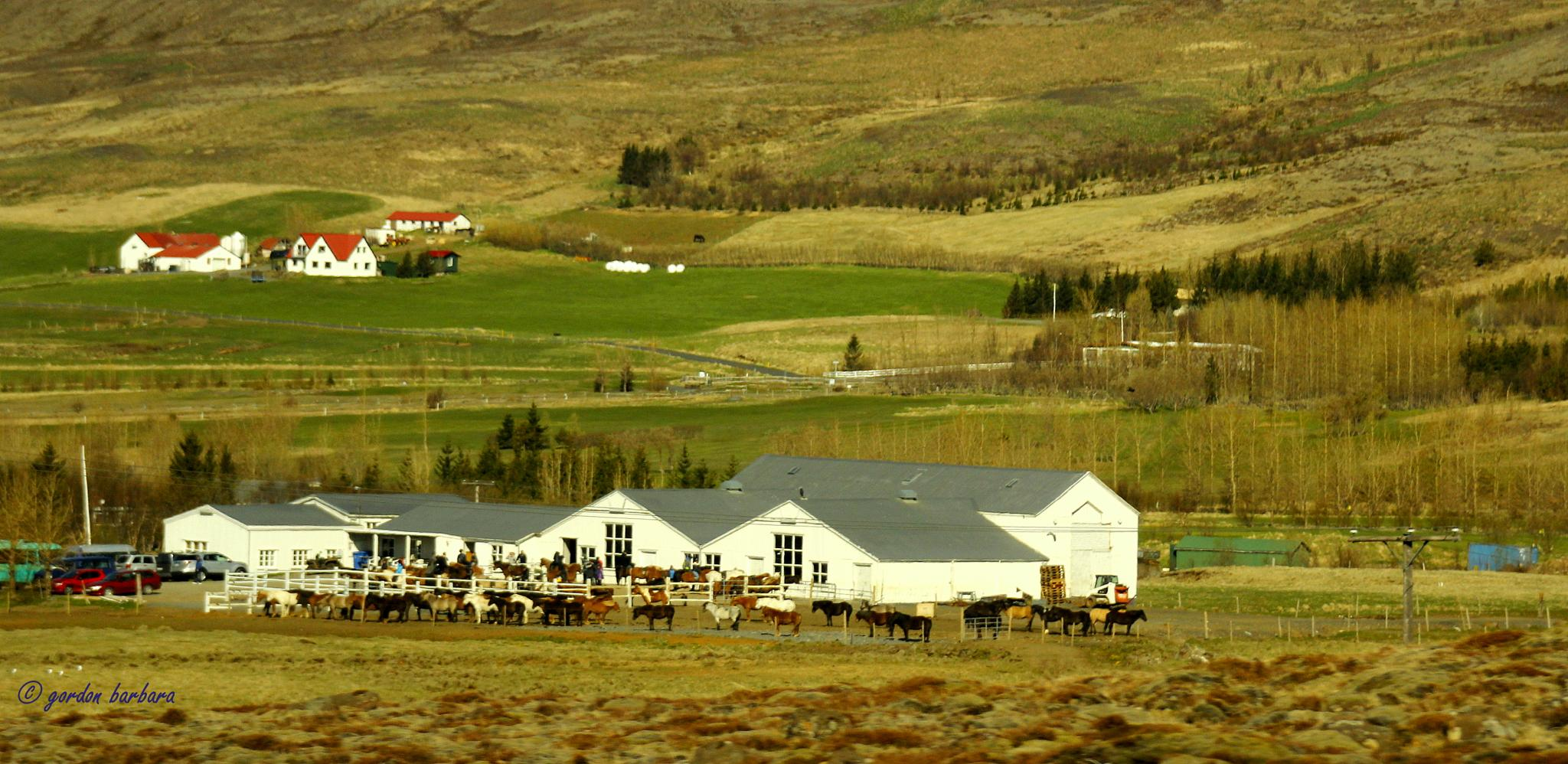 Photo in Cityscape #houses #iceland #farmers