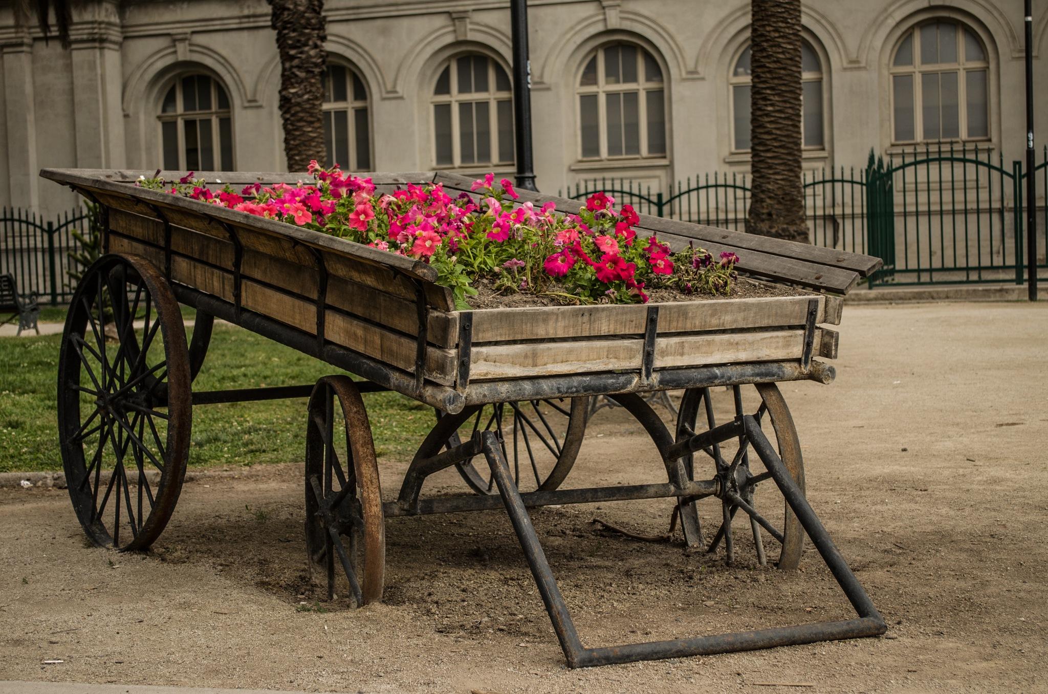 carreta floreada en parque quinta normal santiago chile octubre 2016 by Aossandon