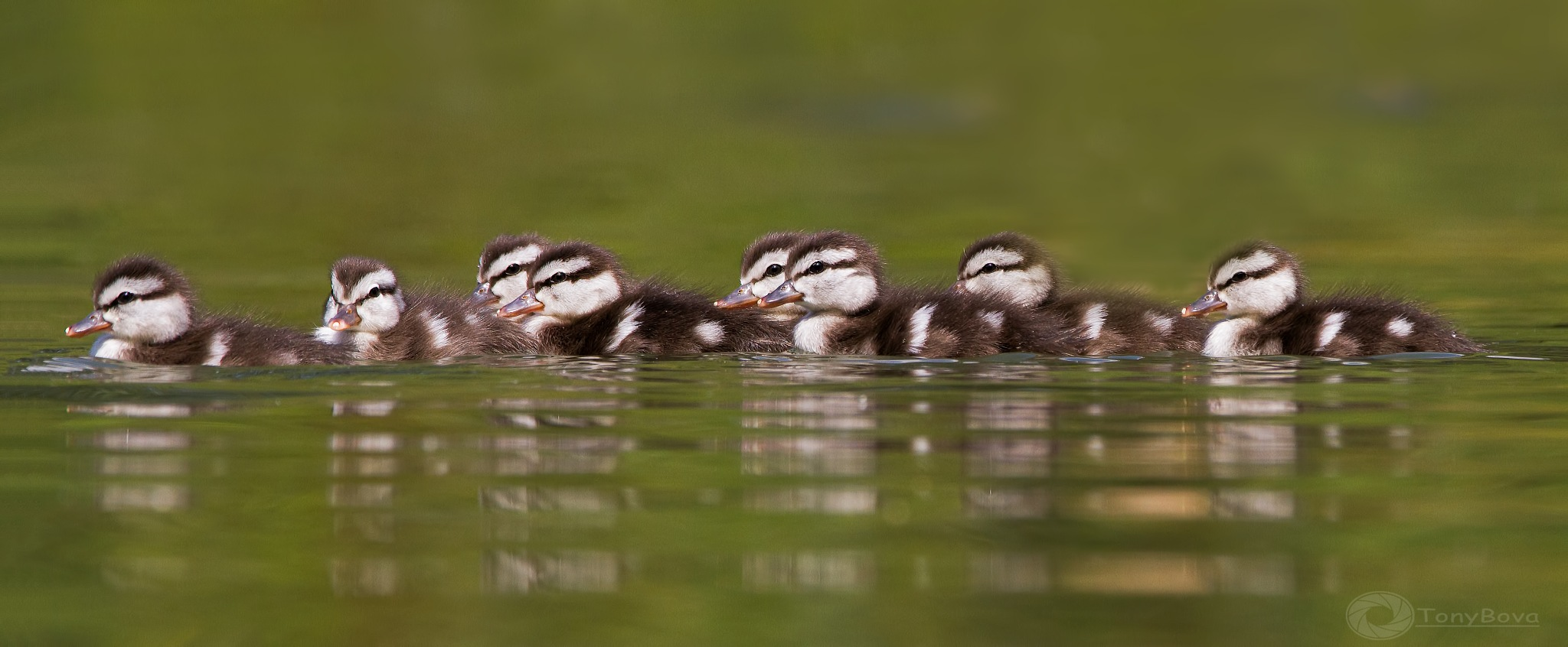 Tutti in fila .... by Tony Bova