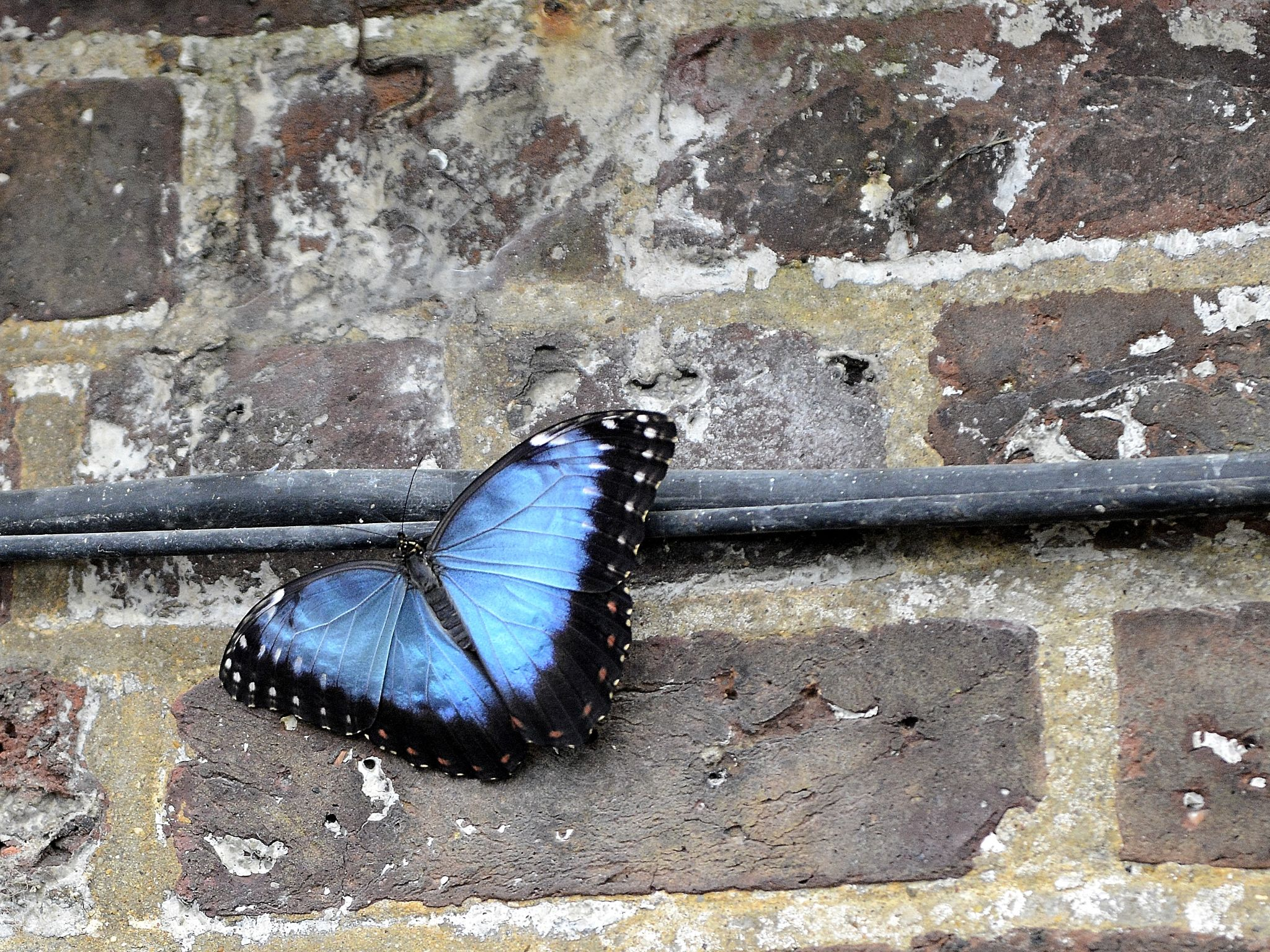 Huge Butterfly; Size of a brick... by goodadvice.com