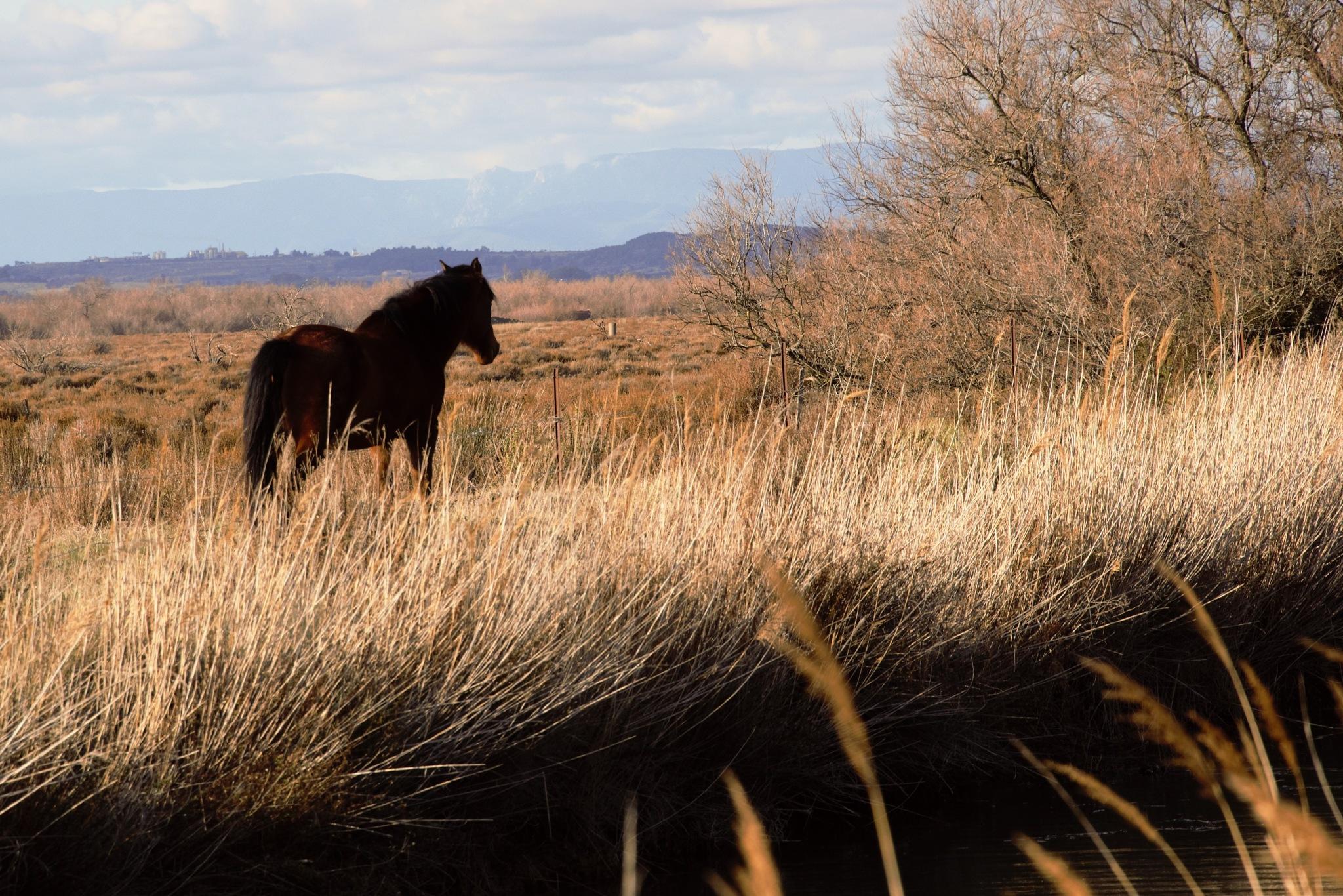 le cheval by rogervande17