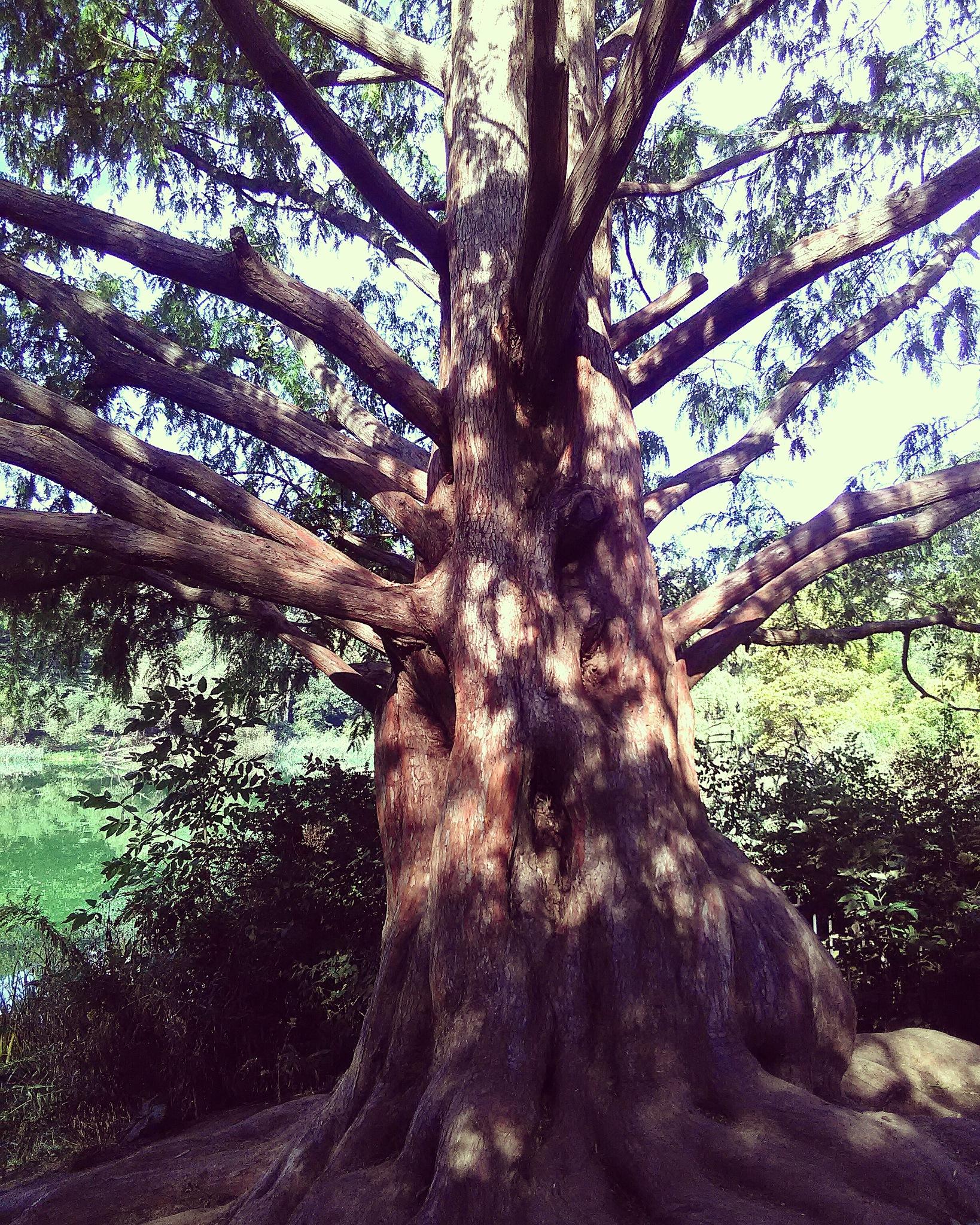 Unique tree in High Park Toronto Canada by smartin3380