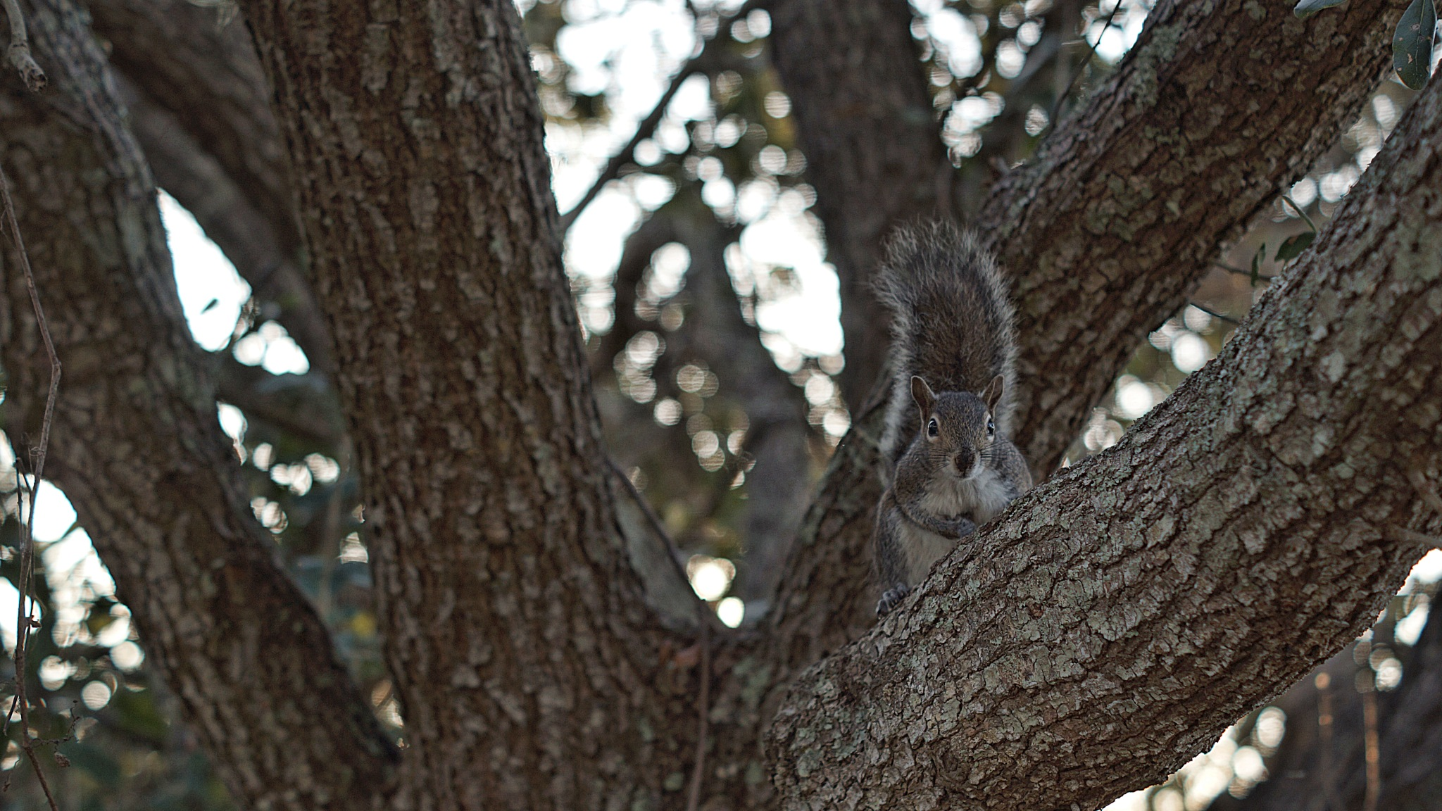 Squirrel hanging out in the tree by smartin3380