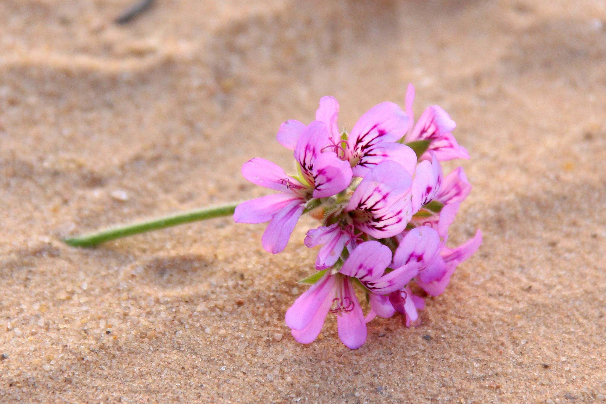 lost flower by marwen
