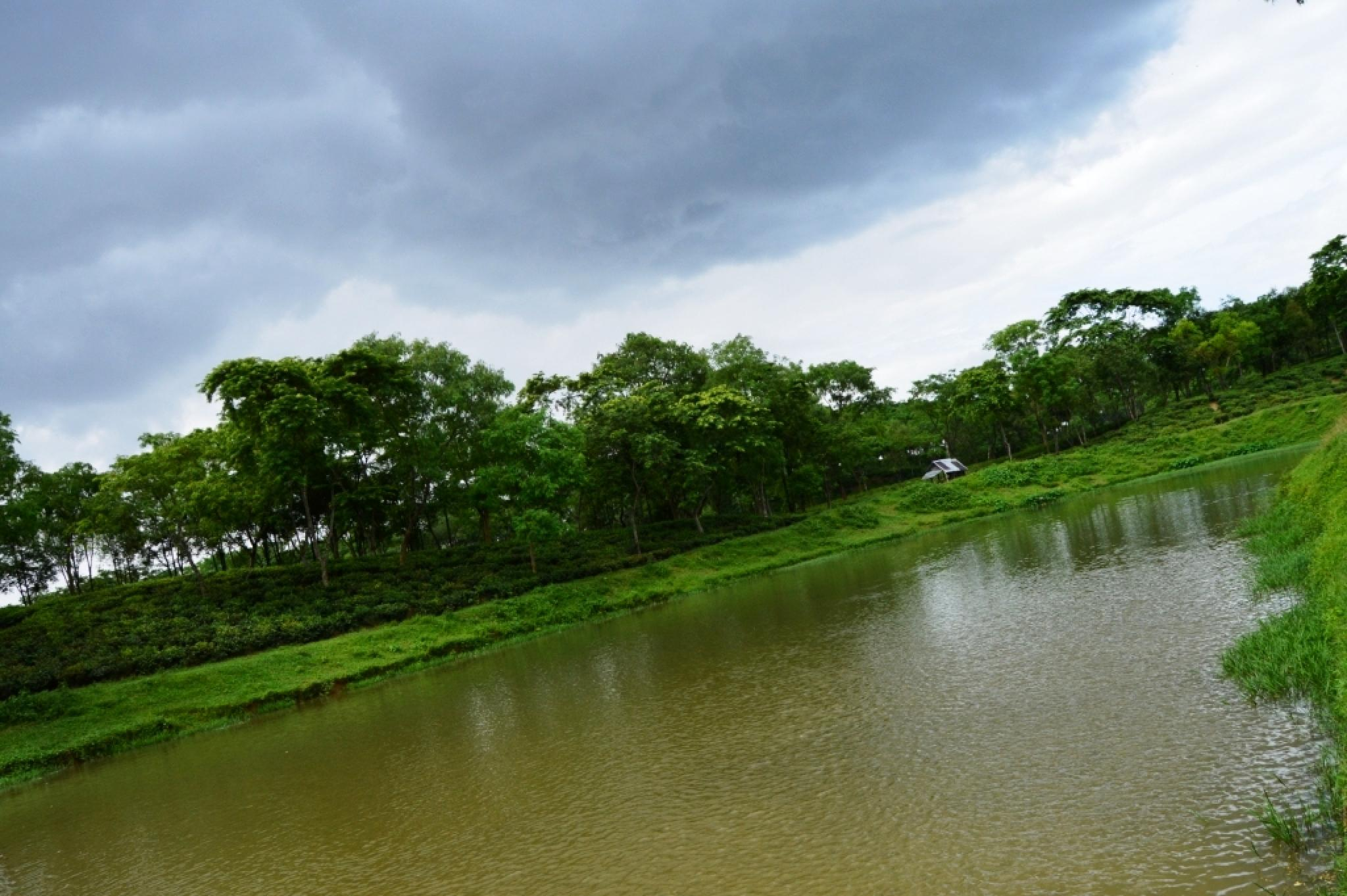Lake in Tea Garden by Mohammad Hanif