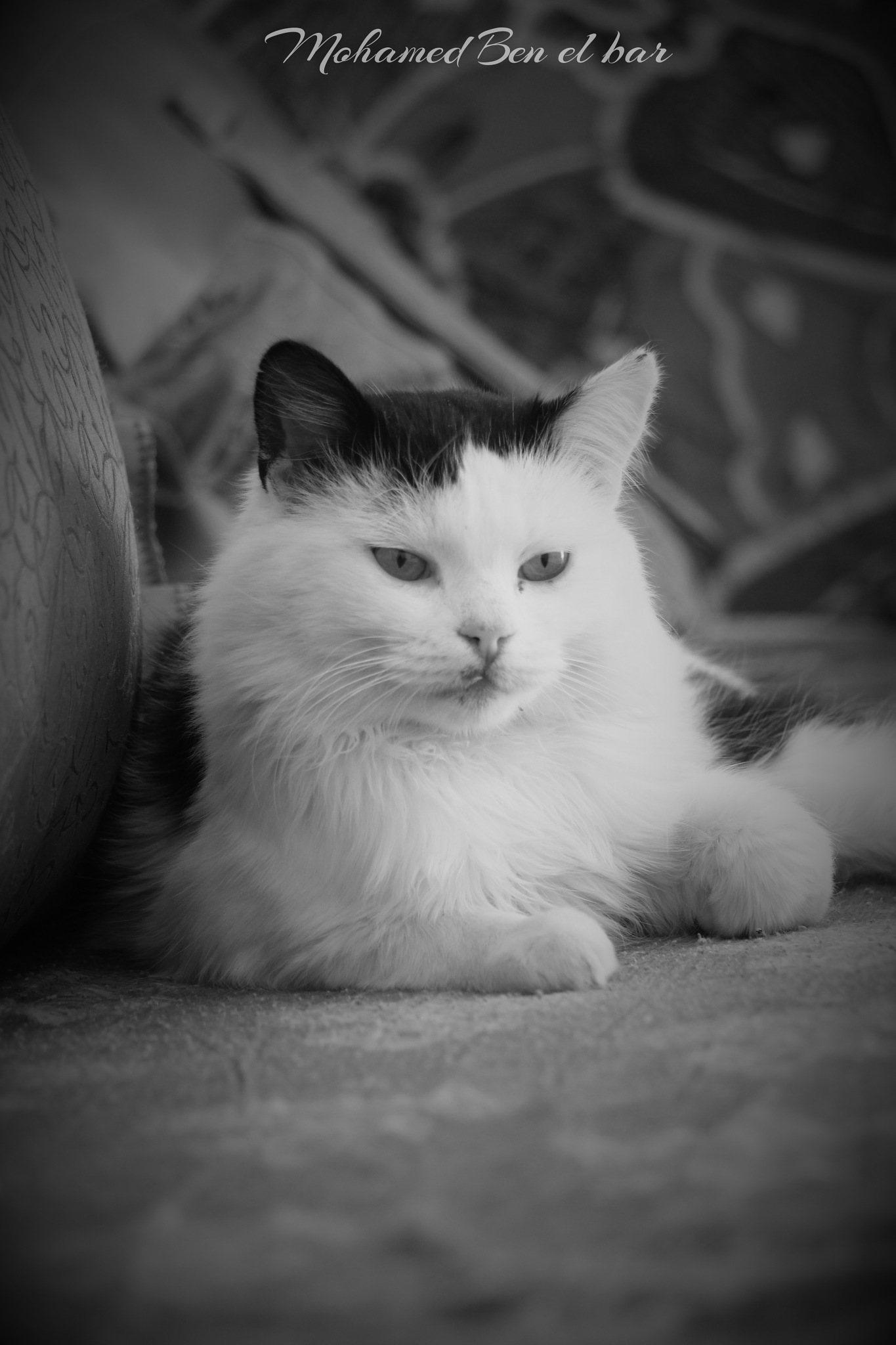 My cat by Mohamed Ben El Bar
