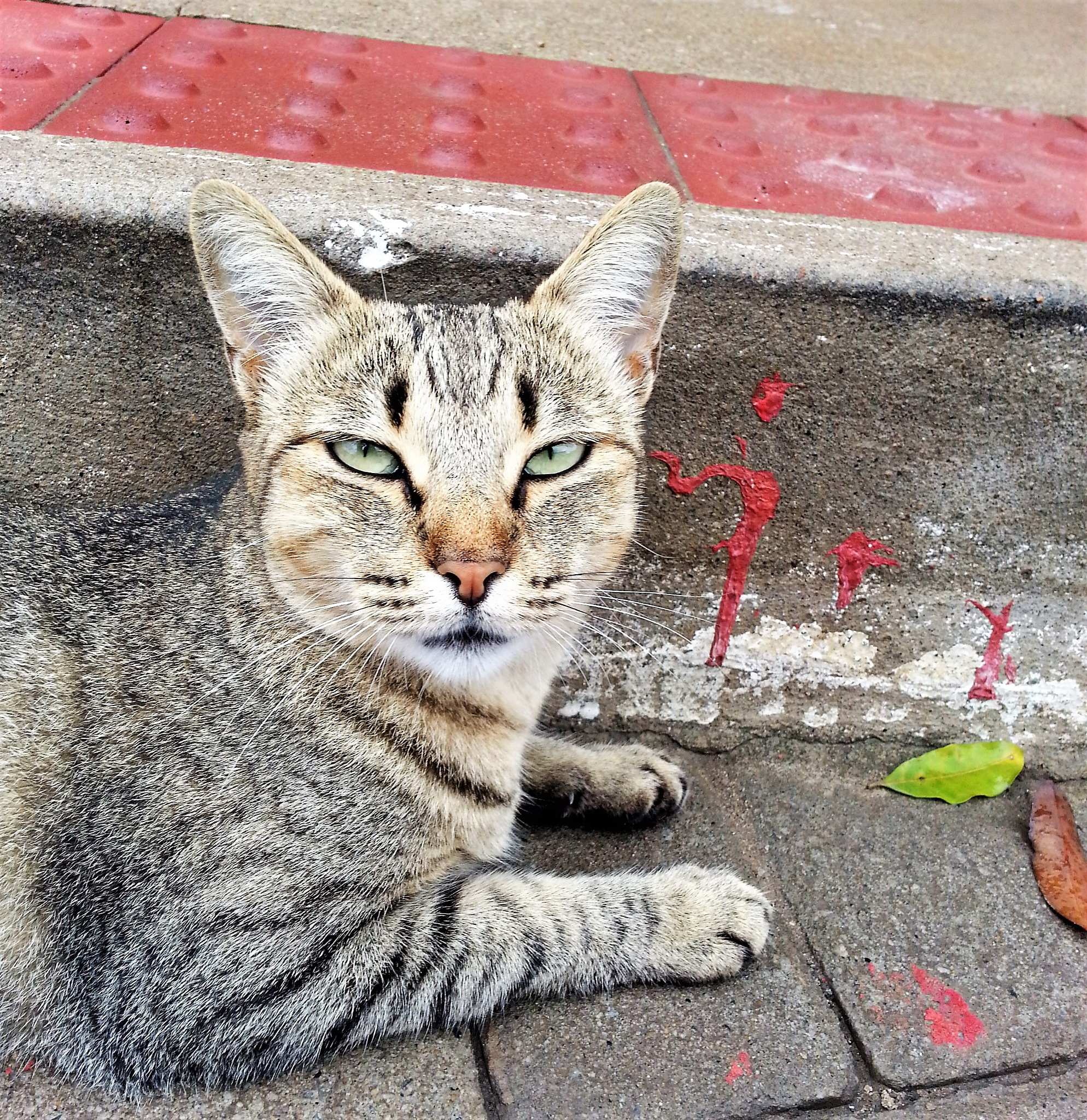 #Wild cat by mário lellis