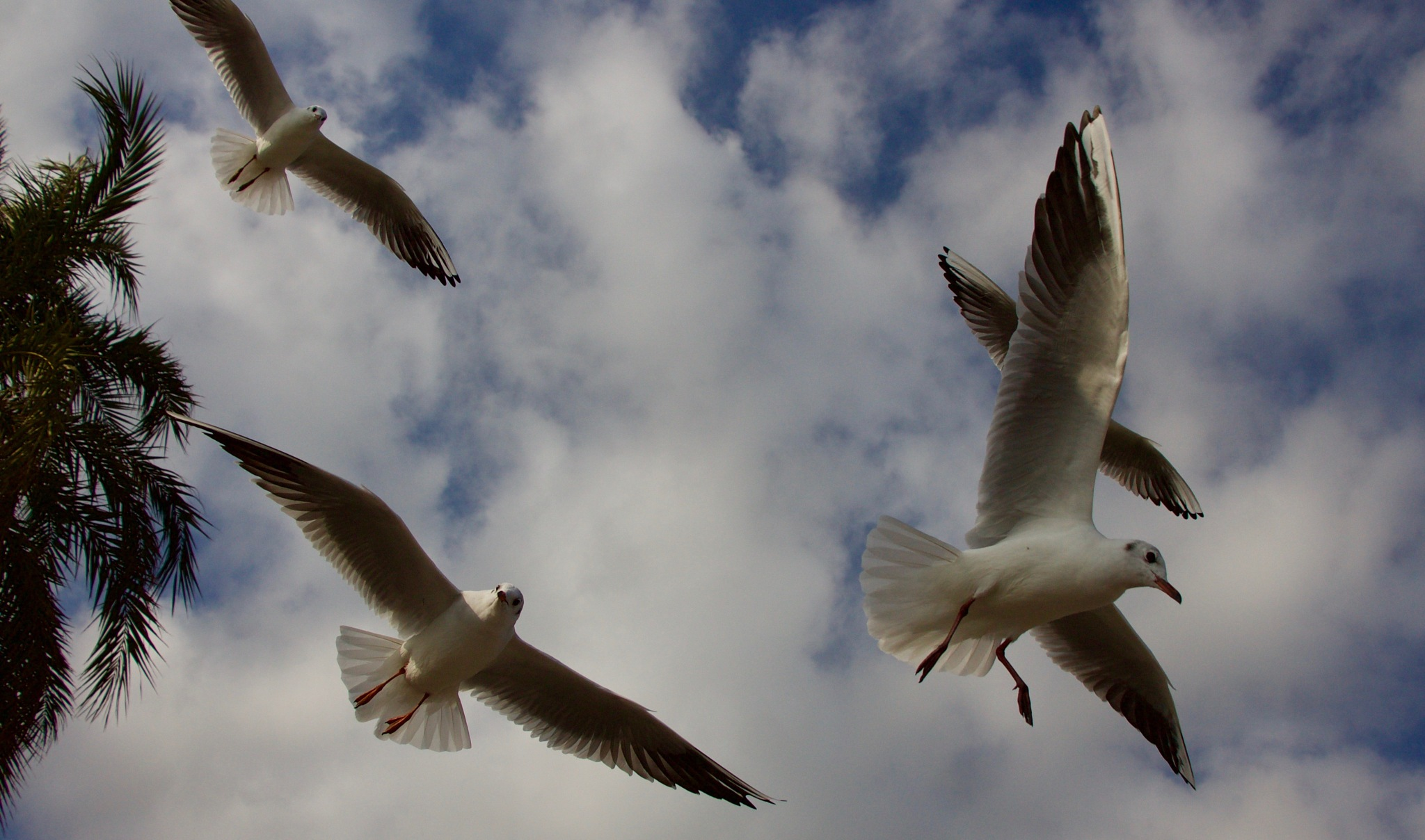 A ballet of Seagulls by Sandra Dubout