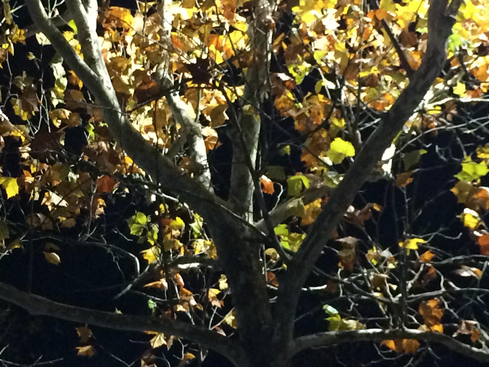 Natural Illumination 2 by Ashley Elizabeth Flood