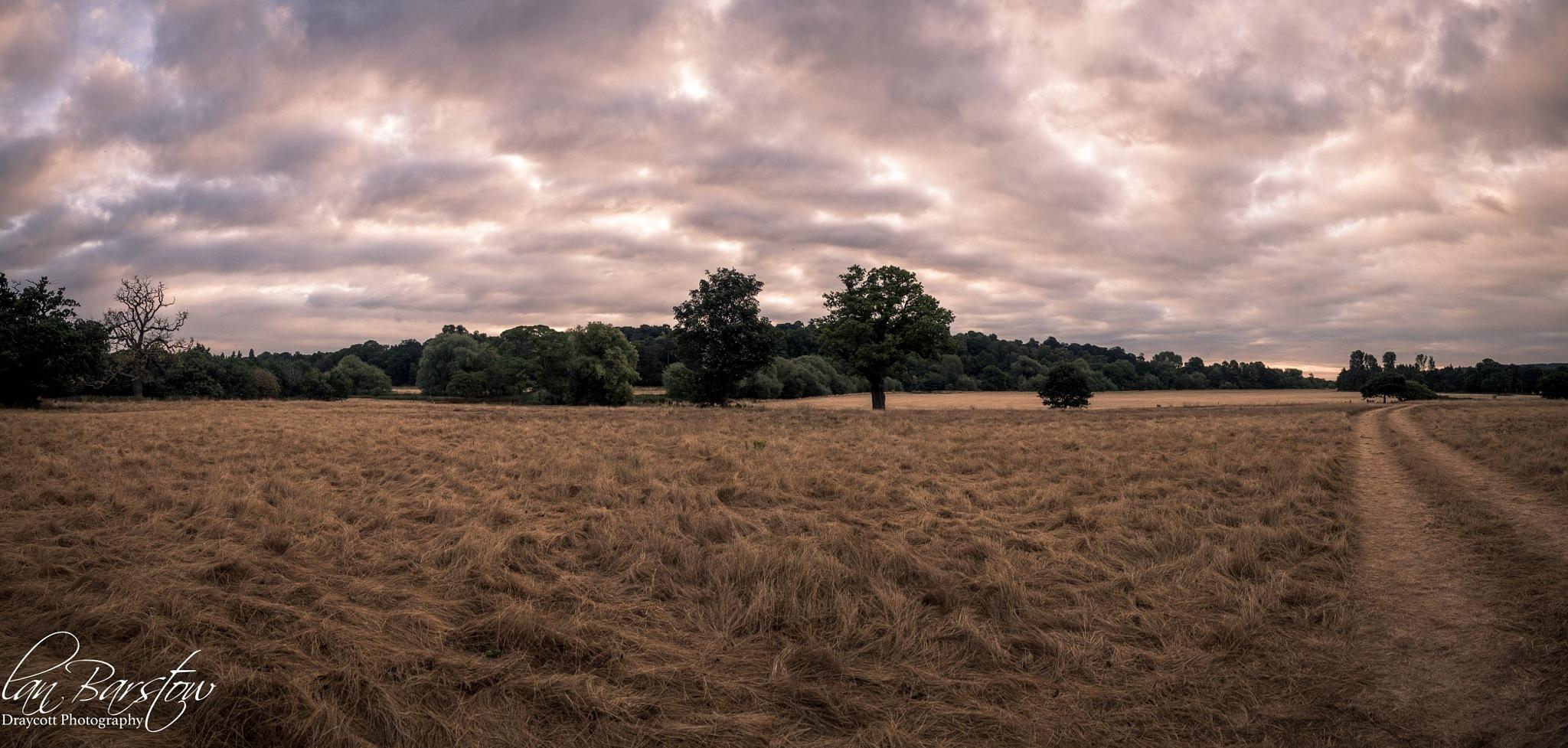 Field Panorama by draycottphotography