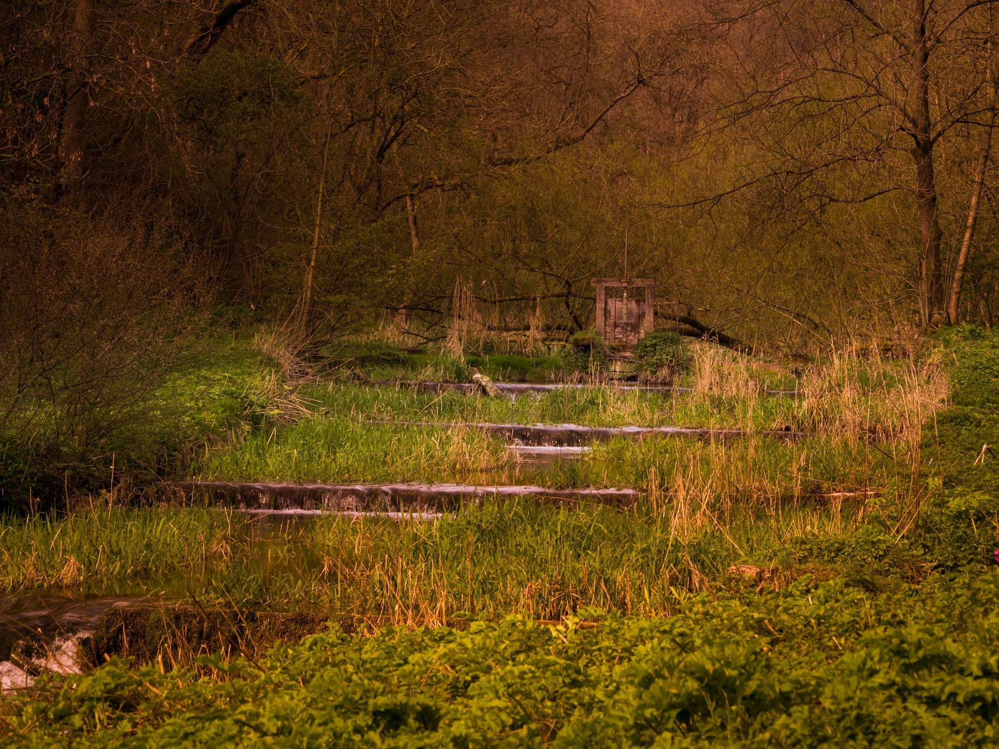 Lathkill Dale by draycottphotography