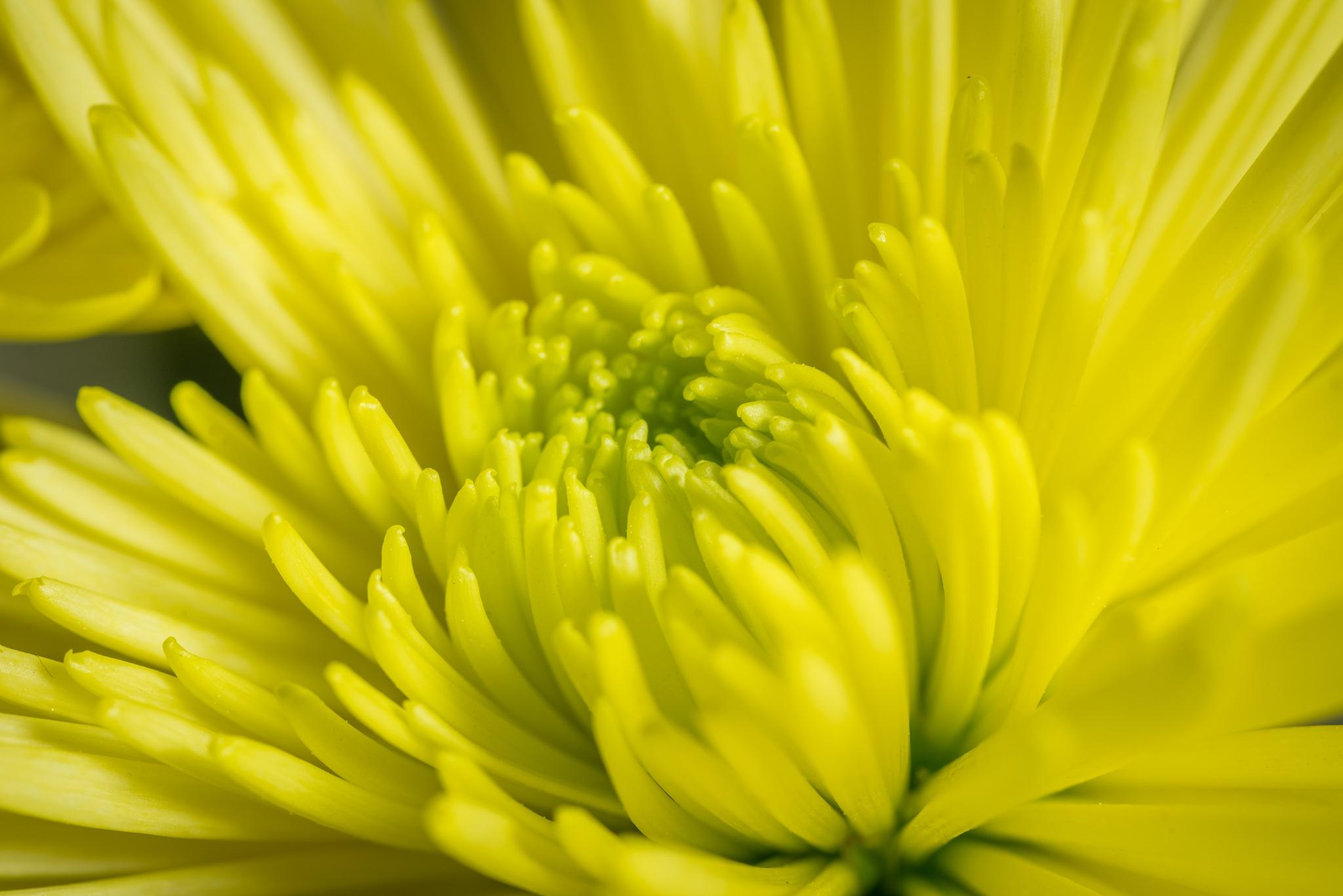 Yellow Flower by joel9498