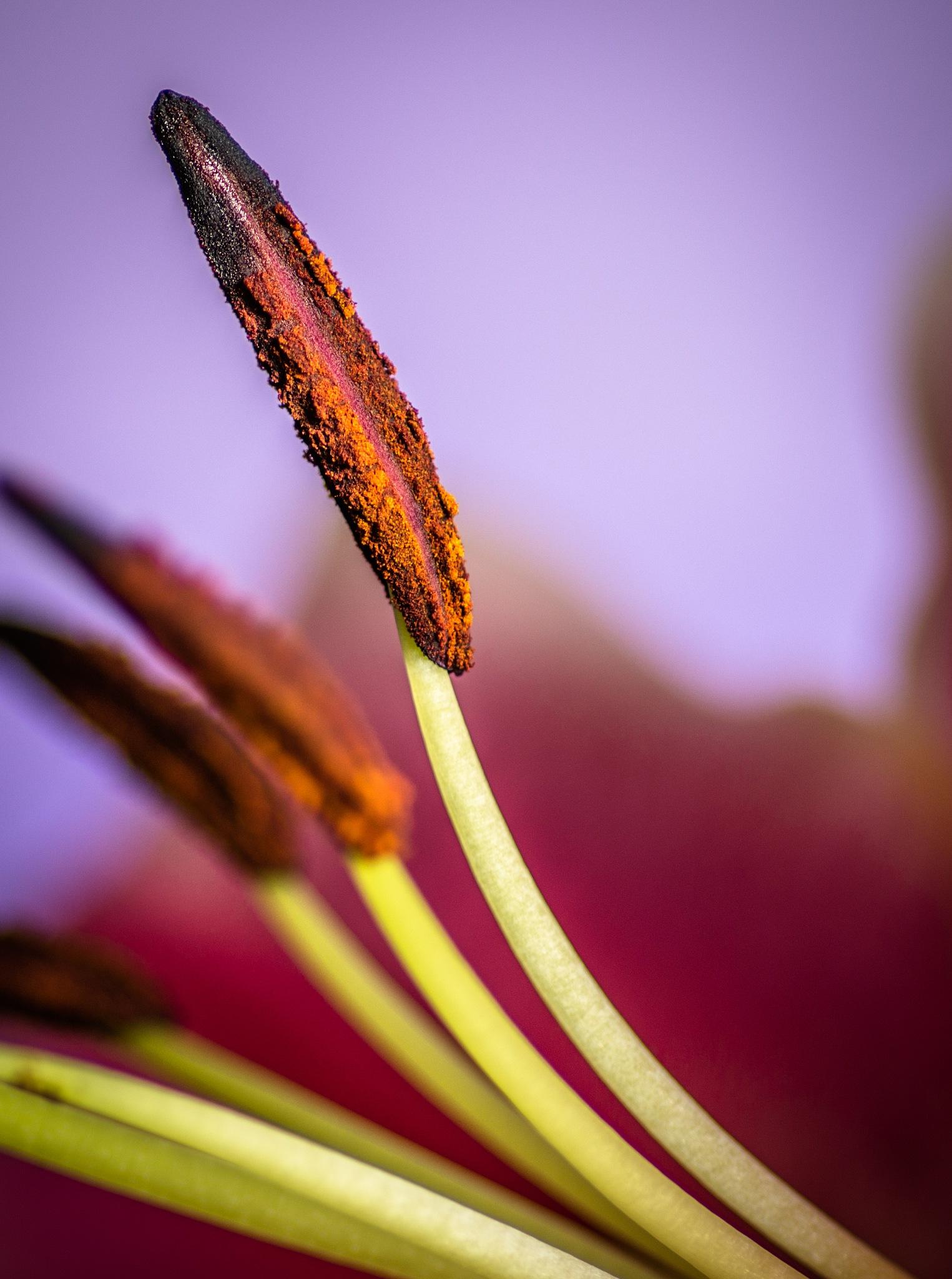 Pollen by joel9498