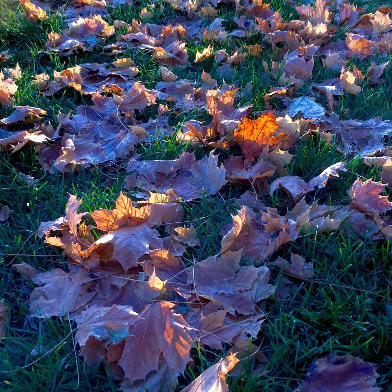 Fall leaves. by thepersianfilmmaker