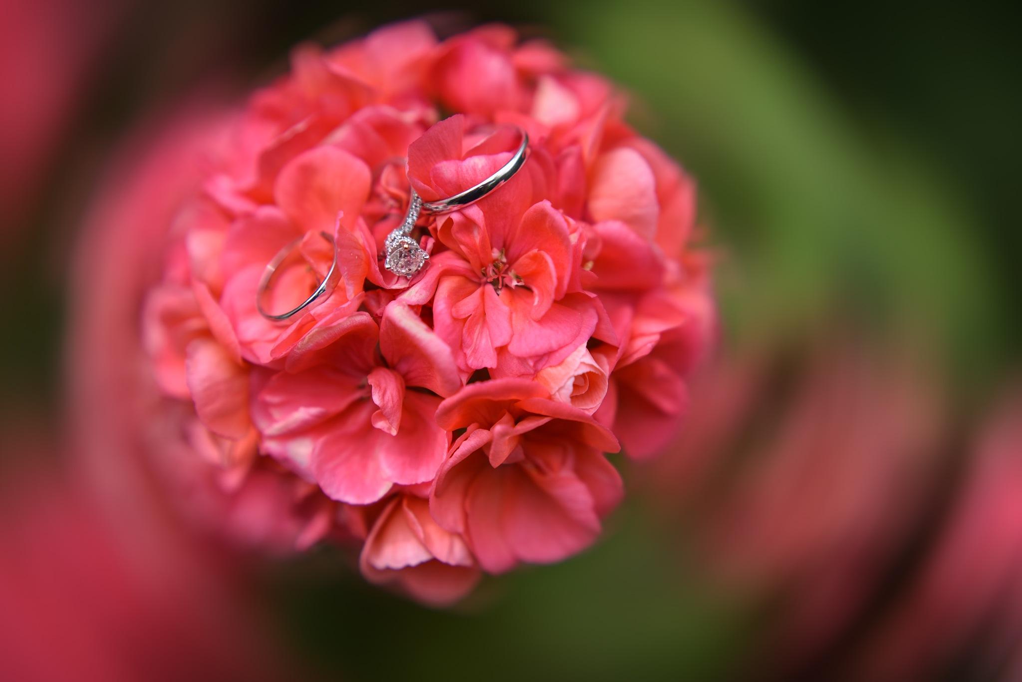 Rings by Ido Shahar