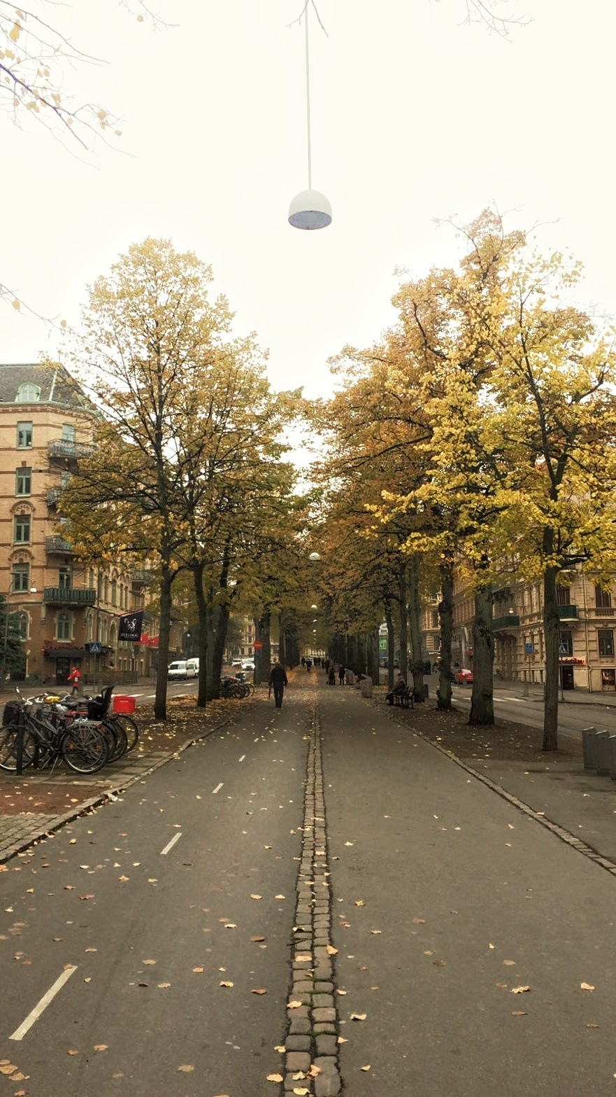 Tree Avenue by whysogio